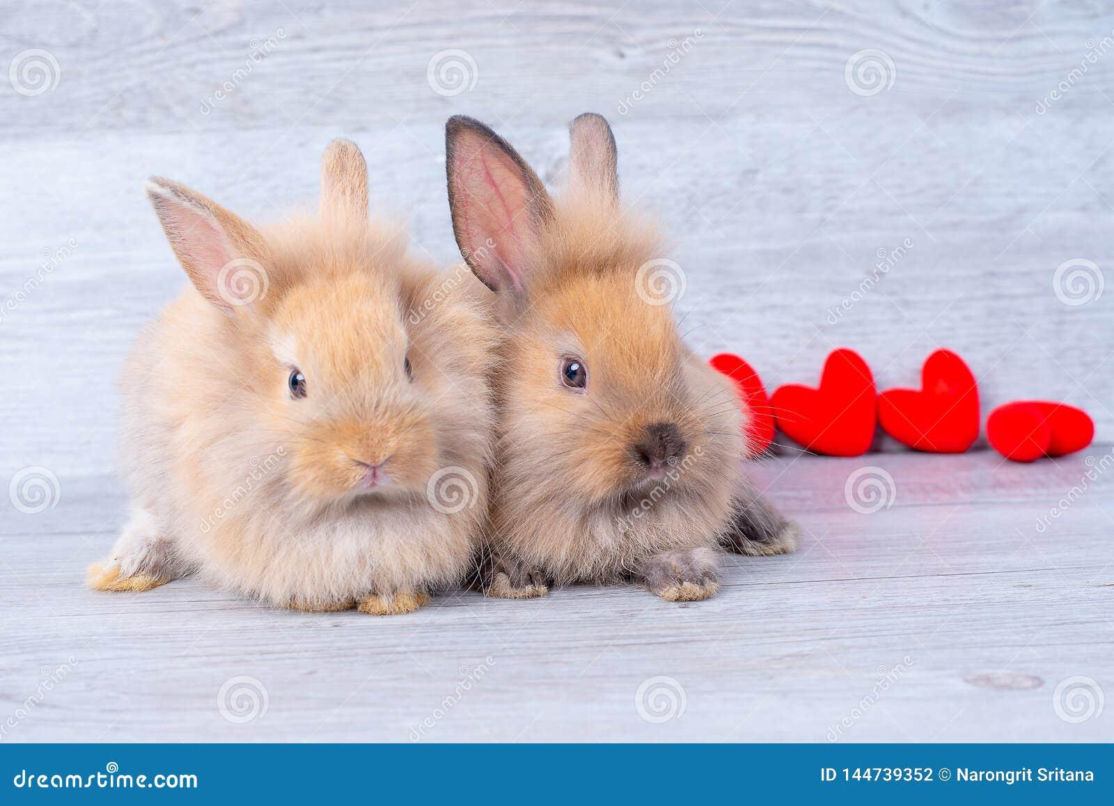 Verbinden Sie kleine hellbraune Häschen auf grauem Hintergrund im Valentinsgrußthema mit Miniherzen hinter ihnen