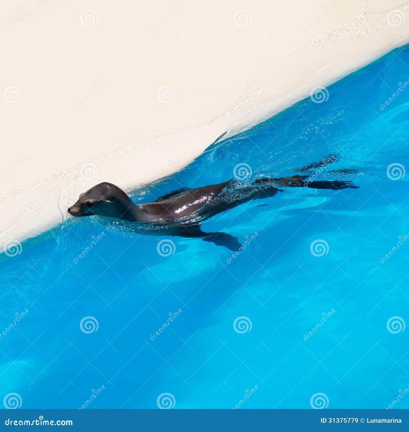 Verbinding die in blauw zoutwater zwemmen