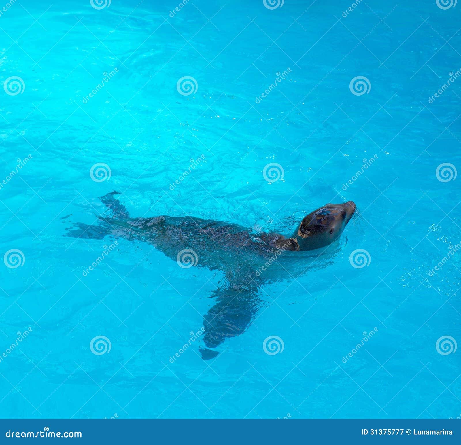 Verbinding die in blauw zoutwater zwemt