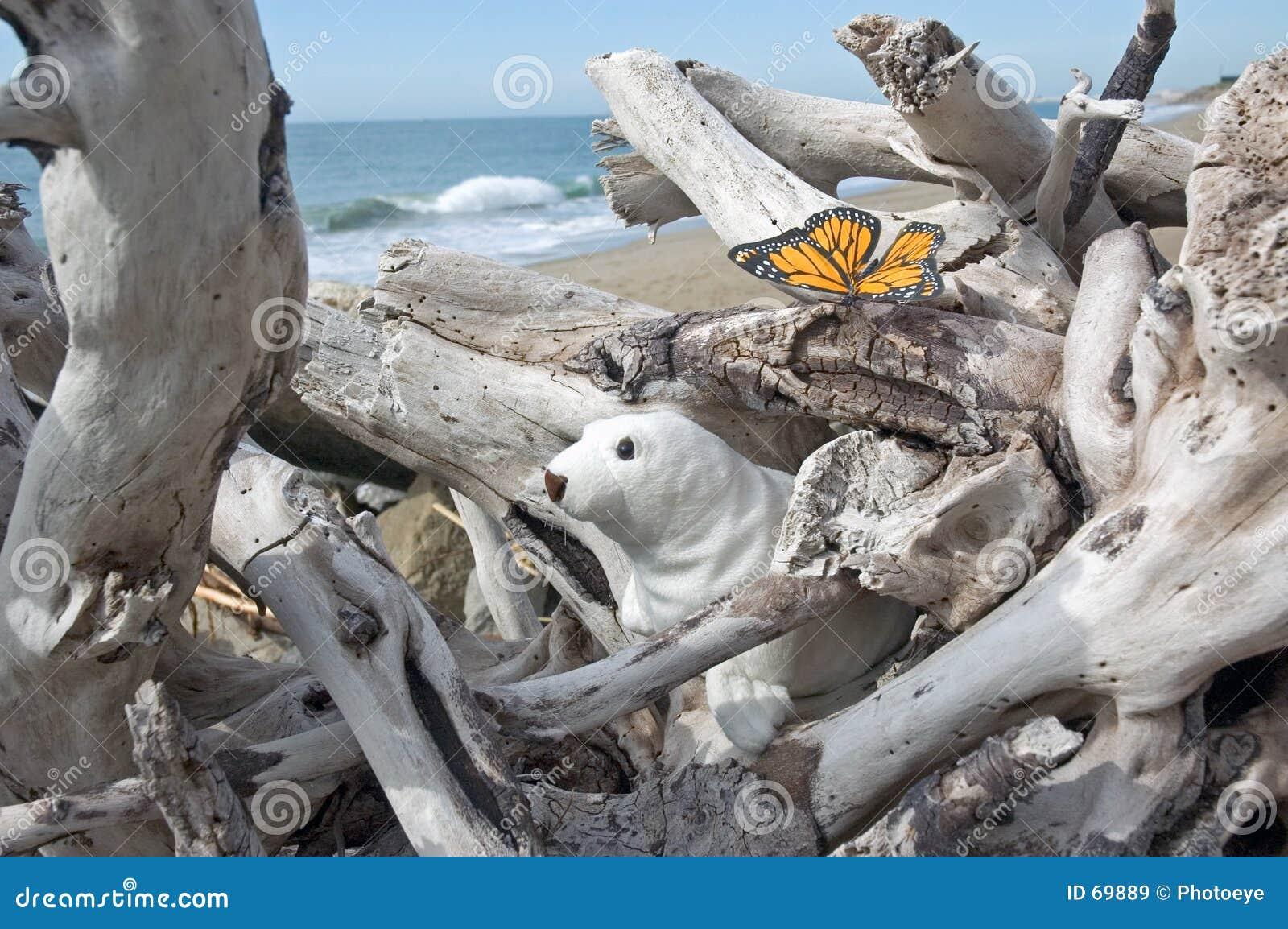 Verbinding en vlinder