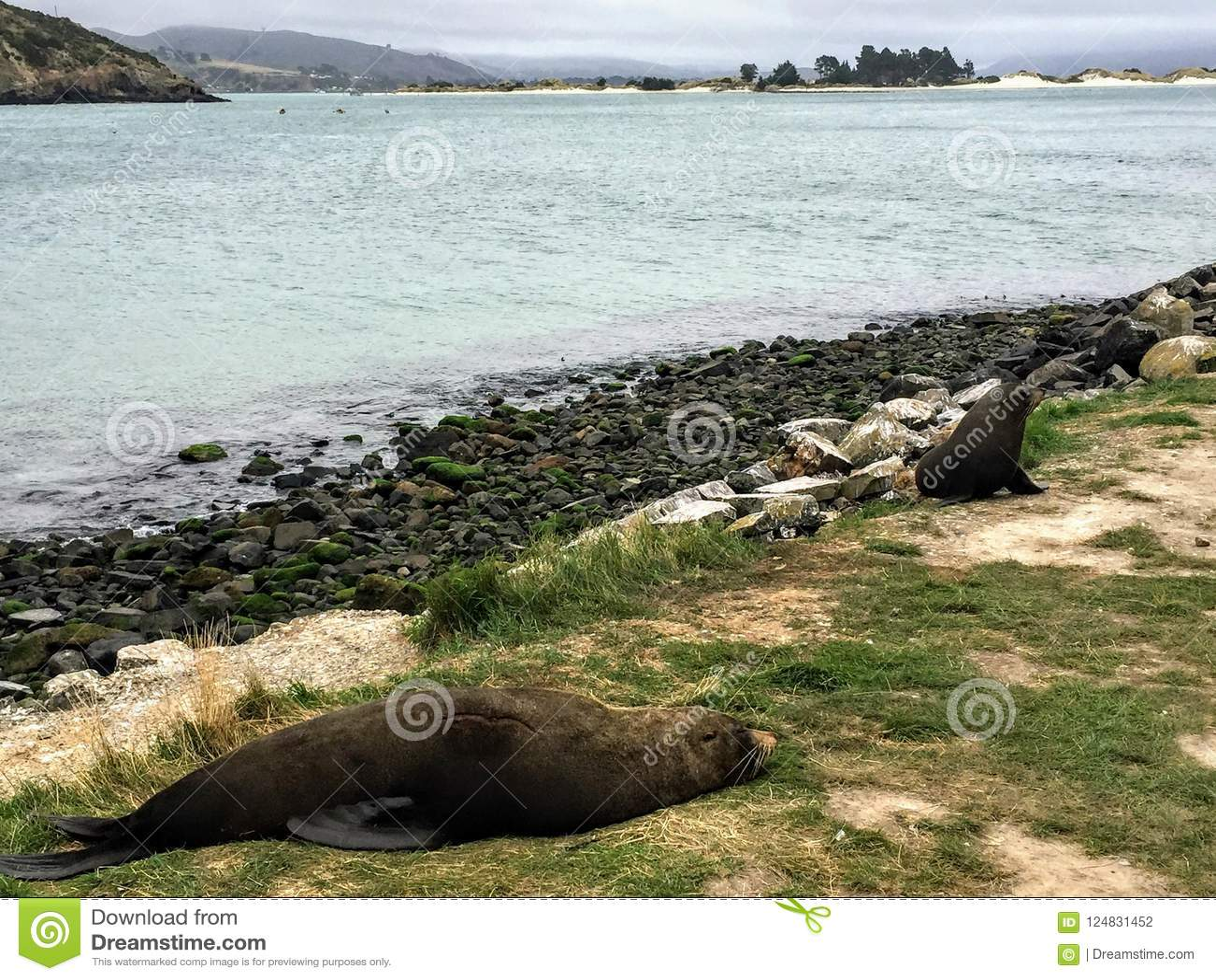 Verbindingen die op de kusten van het Otago-Schiereiland buiten D ontspannen