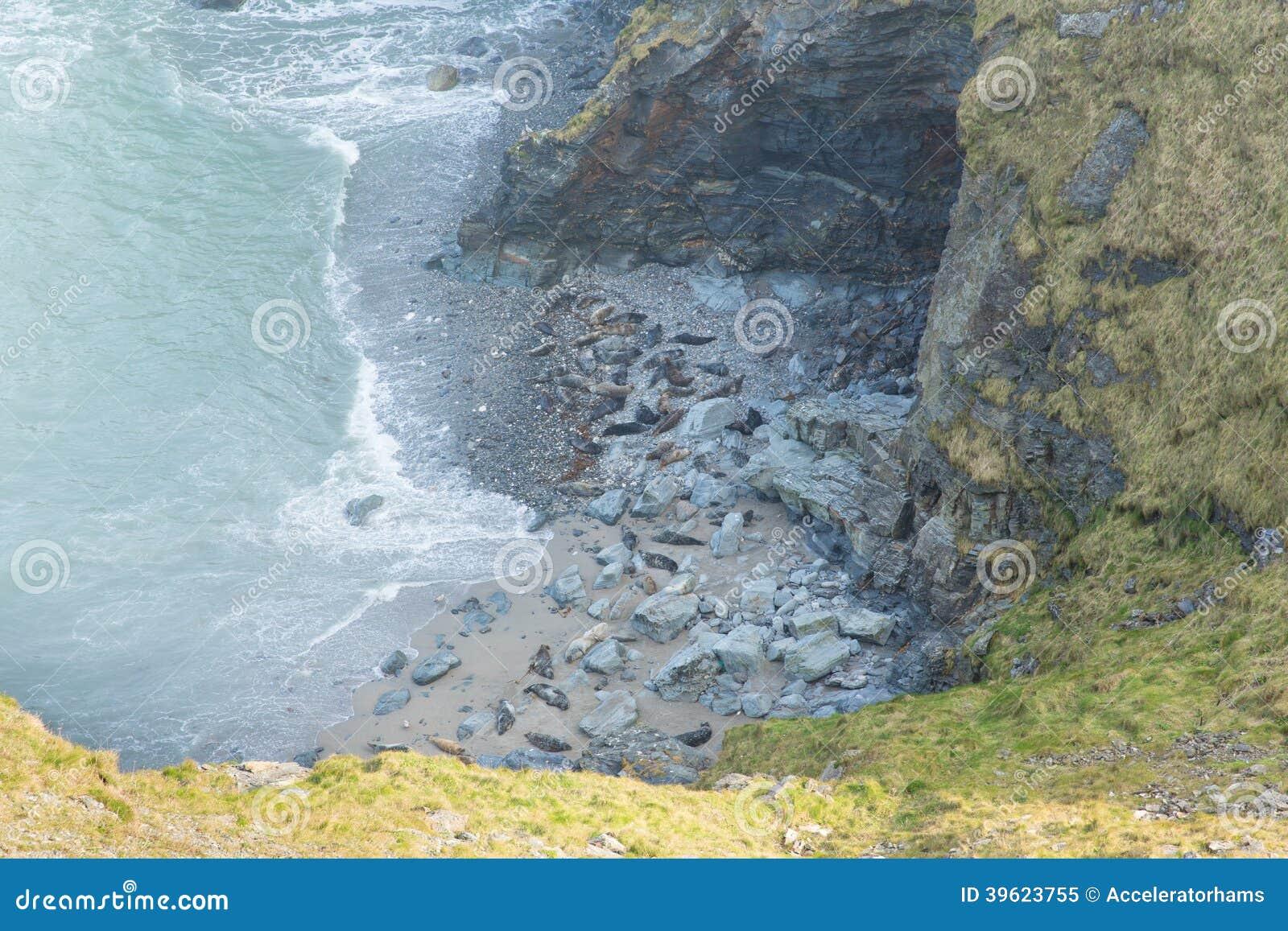 Verbindingen Op Cornwall De Inham Van Het Strandschaap