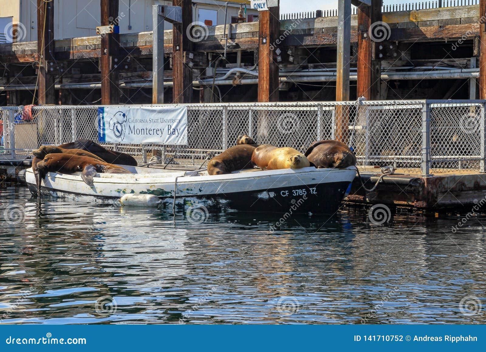 Verbindingen of zeeleeuwen die op een vastgelegde boot slapen