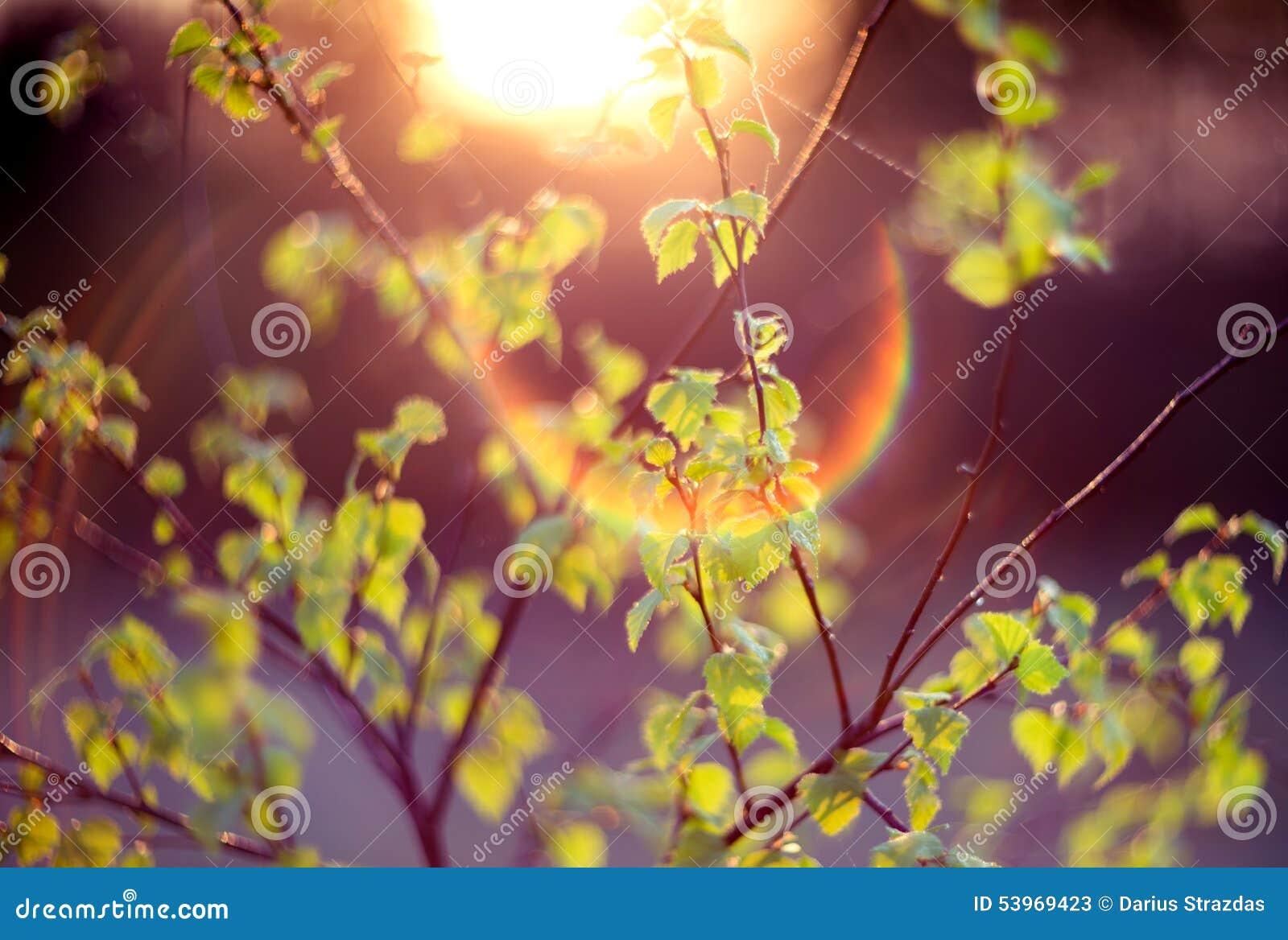 Verde da natureza do alargamento da lente