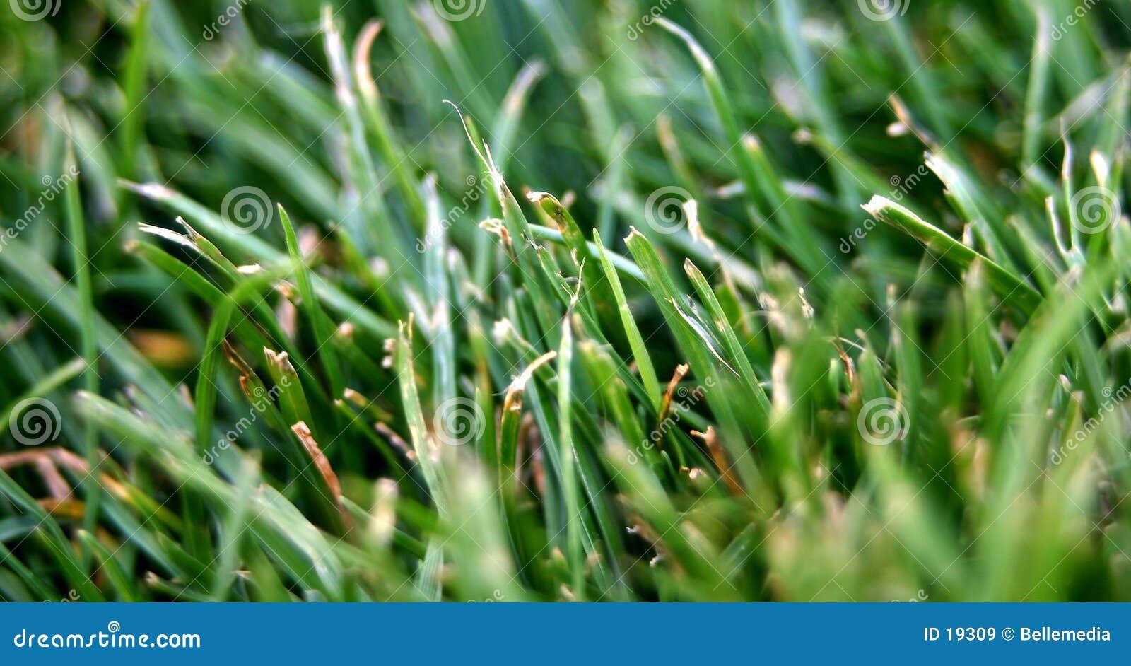 Verde de hierba
