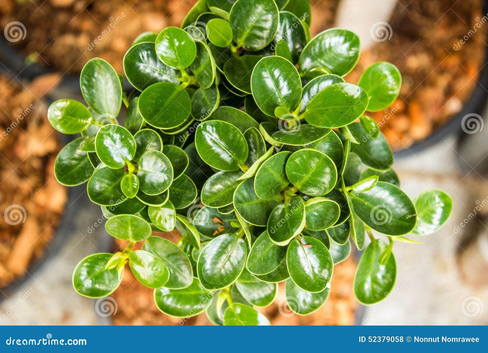 Verde de las plantas ornamentales foto de archivo imagen for 6 plantas ornamentales