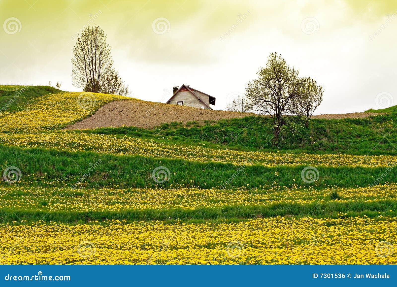 Verde del campo