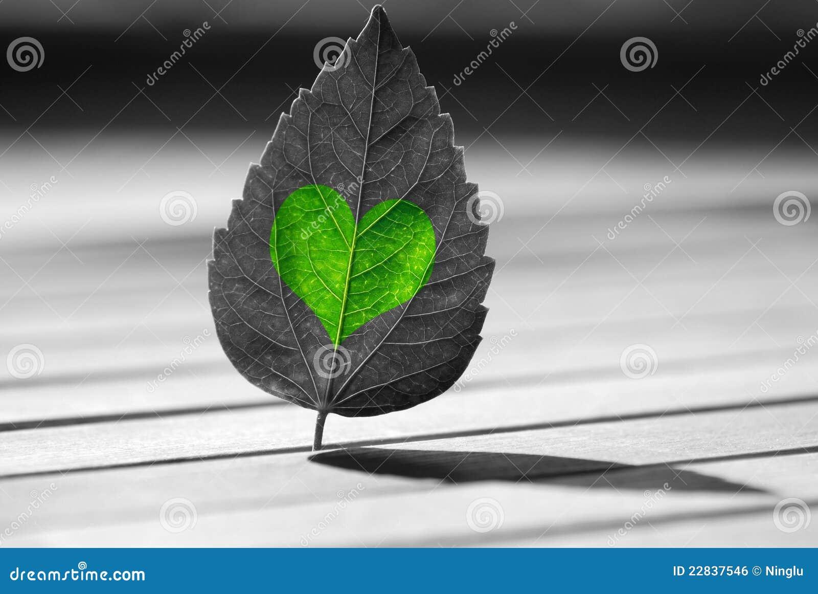 Verde heart-shaped na folha