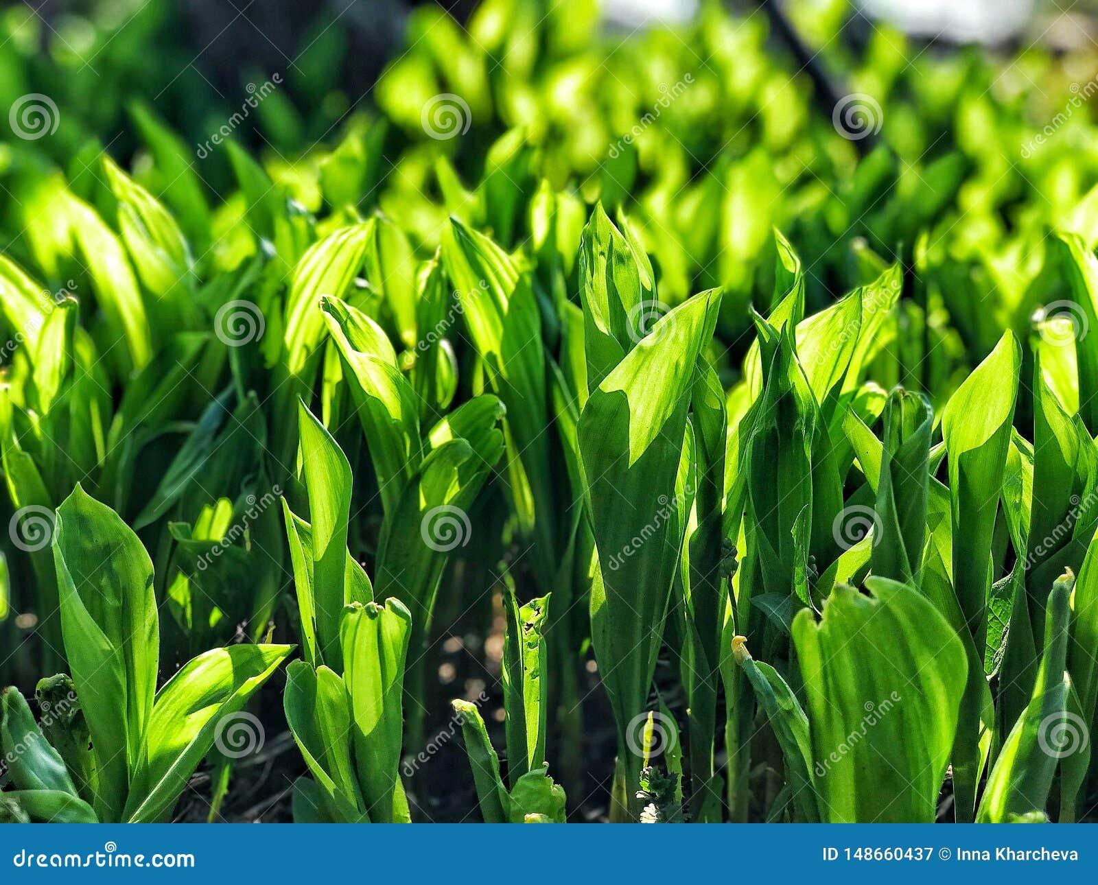 Verde soleggiato