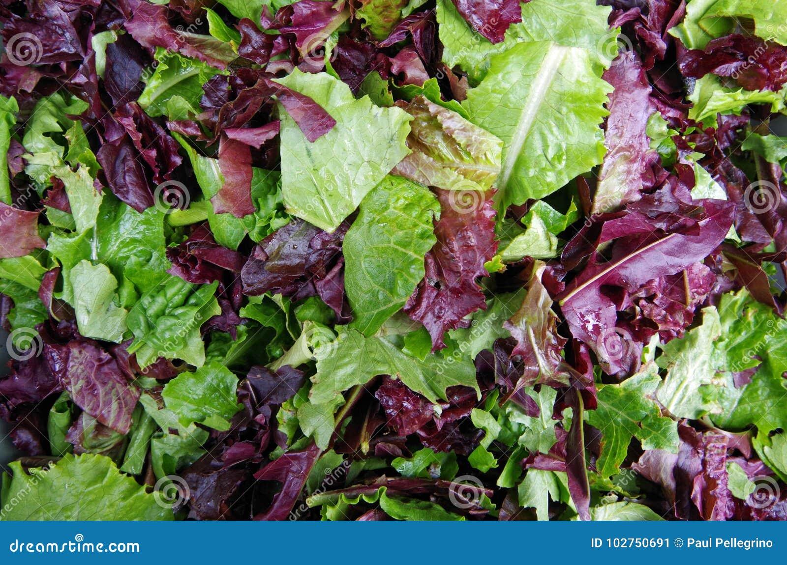 Verdes do campo da salada