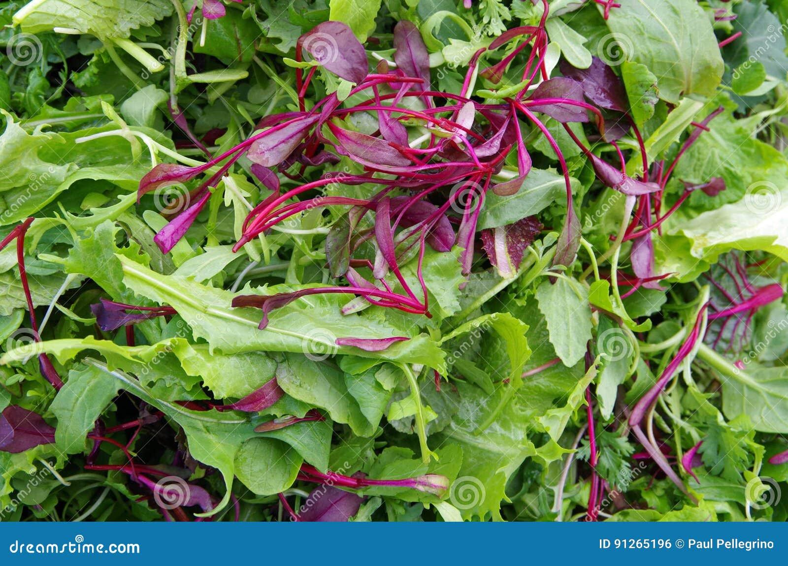 Verdes frescos do campo da salada misturada