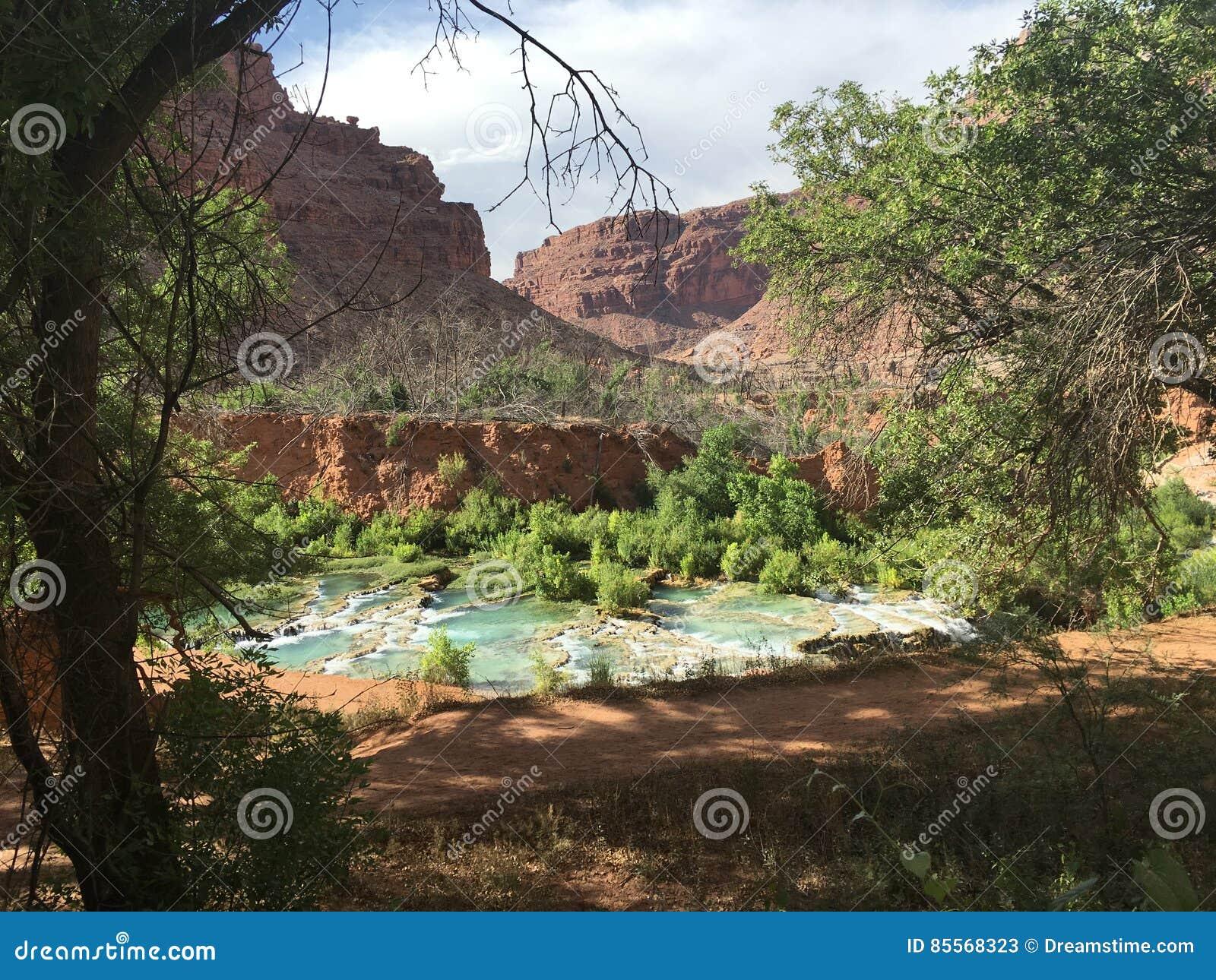 Verdor de Grand Canyon