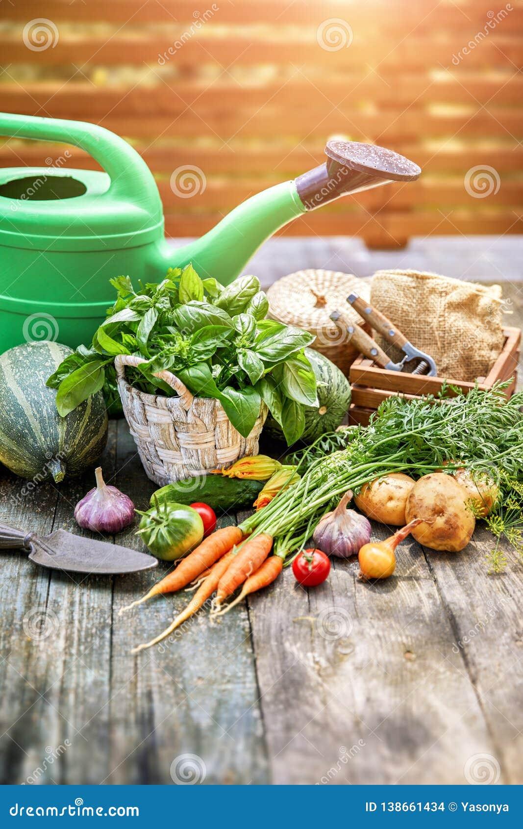 Verduras de la cosecha con las hierbas y las especias