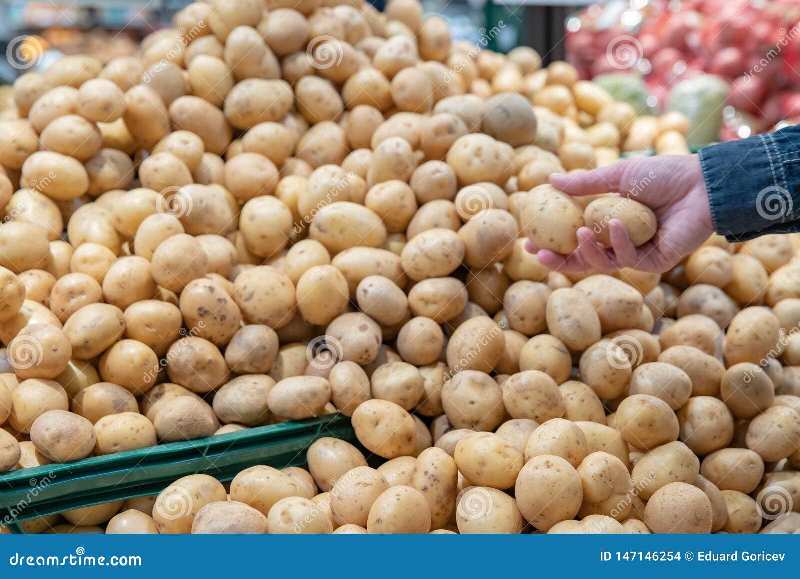 Verduras frescas en estantes del supermercado y en mercados en cajones de granjeros ofrecido en venta