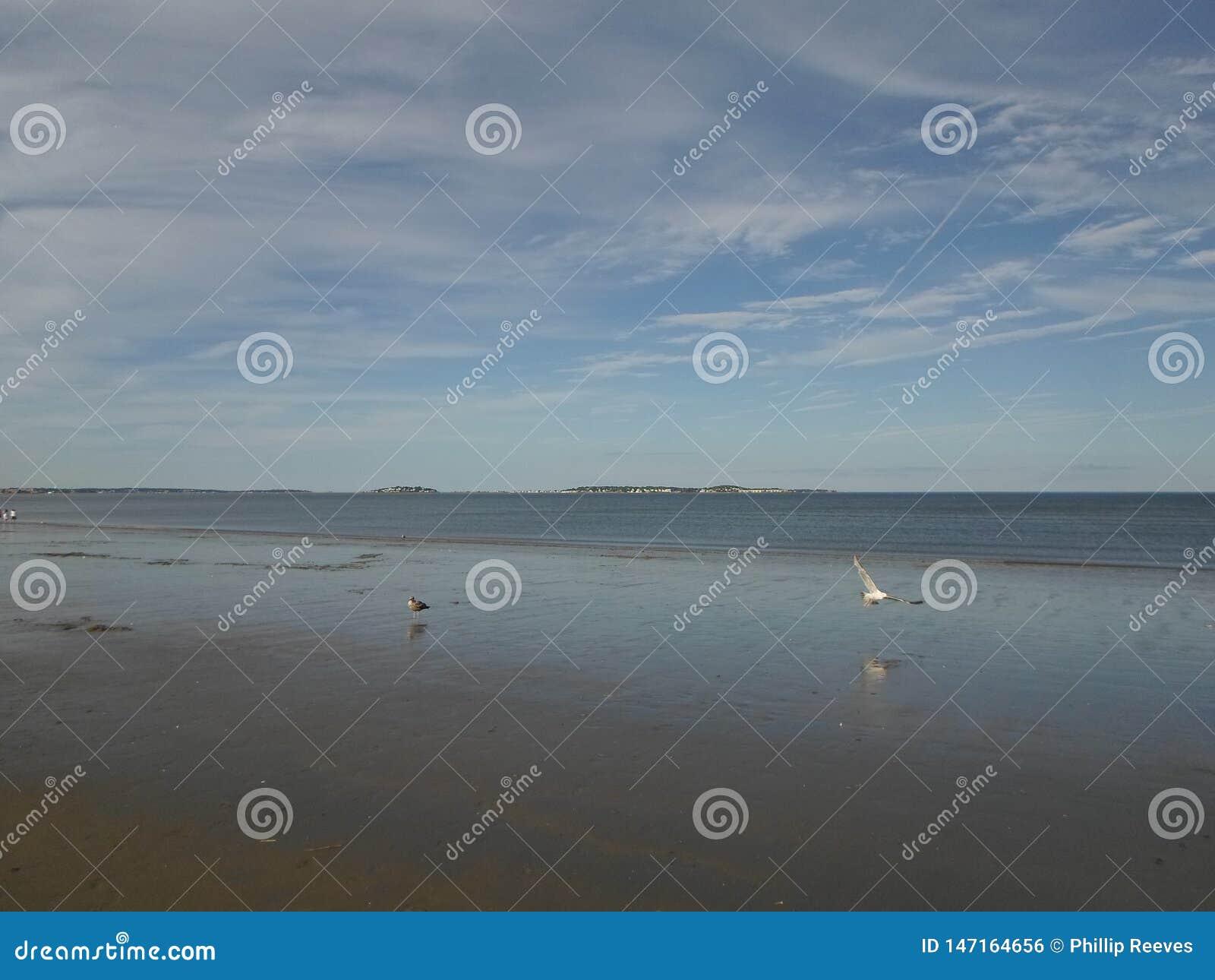 Verehren Sie Strand, verehren Sie, Massachusetts, USA