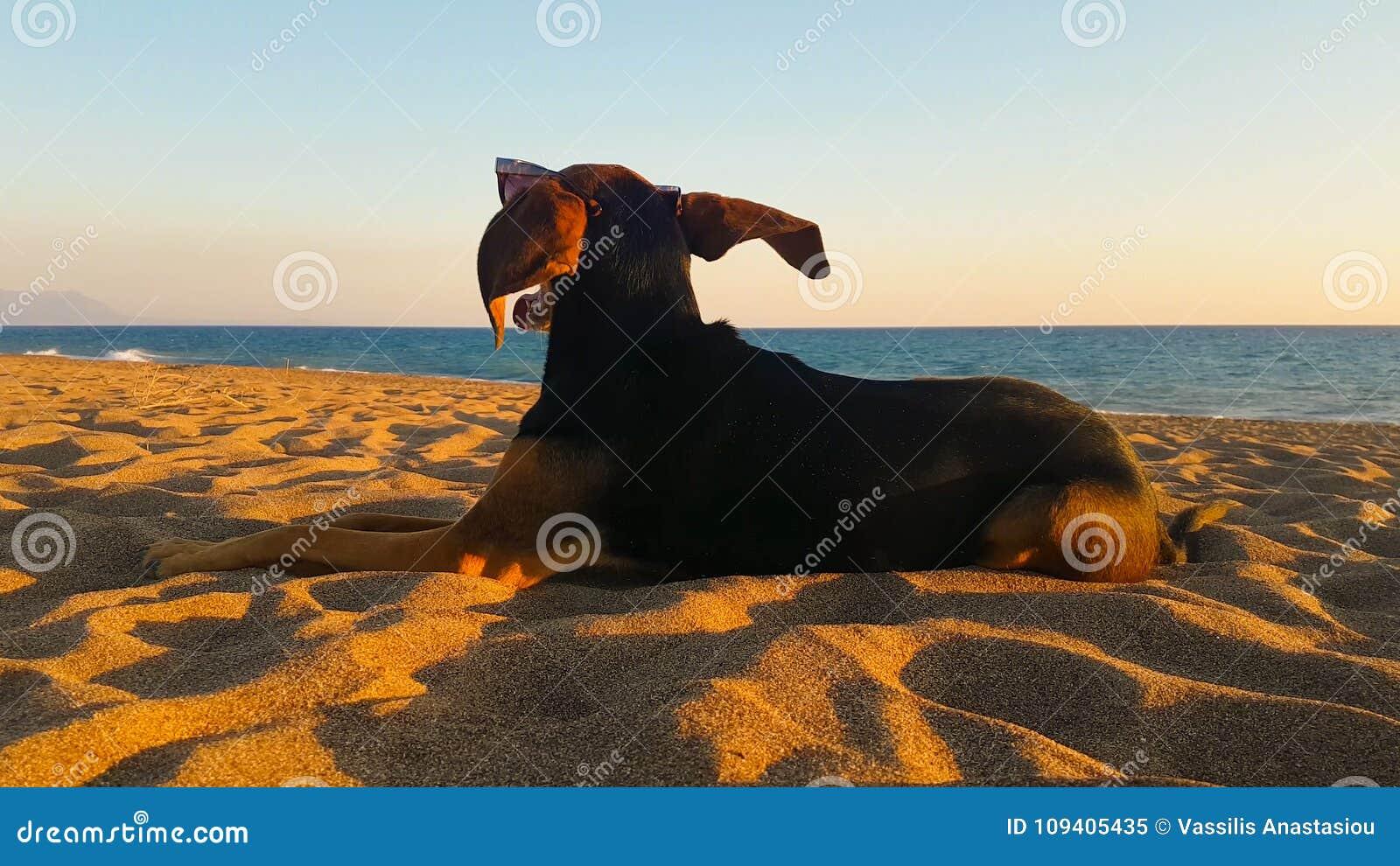 Verfolgen Sie das Porträt, das den Strand betrachtet, während der Wind durchbrennt Ein netter Moment der Entspannung