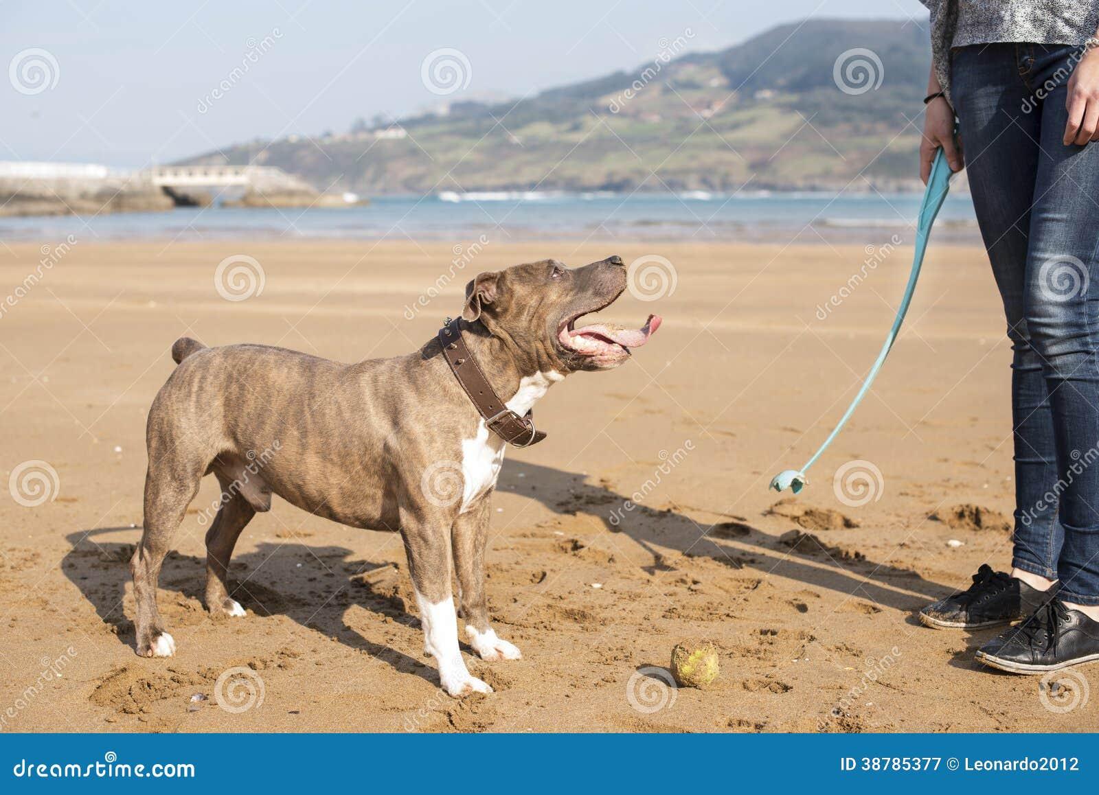 Verfolgen Sie das Spielen und die Ausbildung mit Ball im Strand.