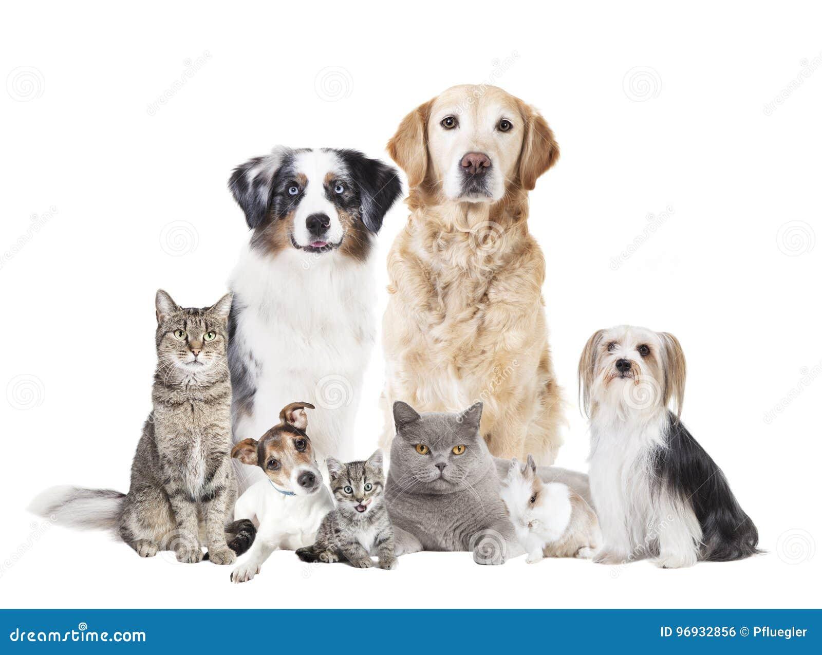Verfolgt die lokalisierten Katzen