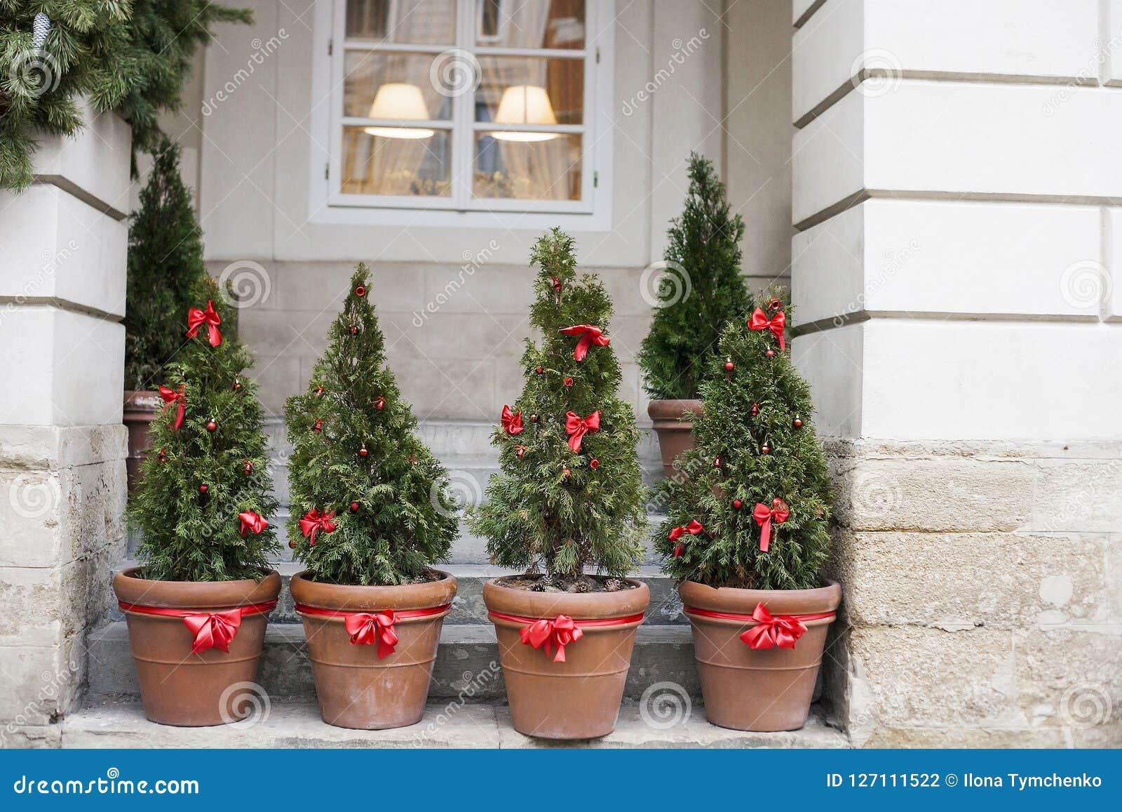 Verfraaide Kerstbomen in potten dichtbij huis