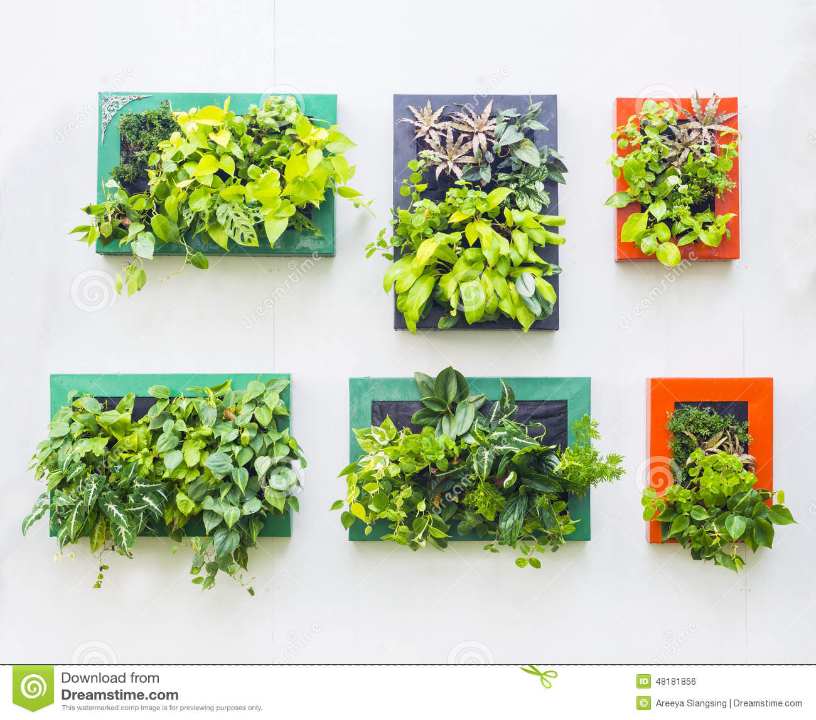 verfraaide muur in verticale tuin stock foto afbeelding 48181856. Black Bedroom Furniture Sets. Home Design Ideas