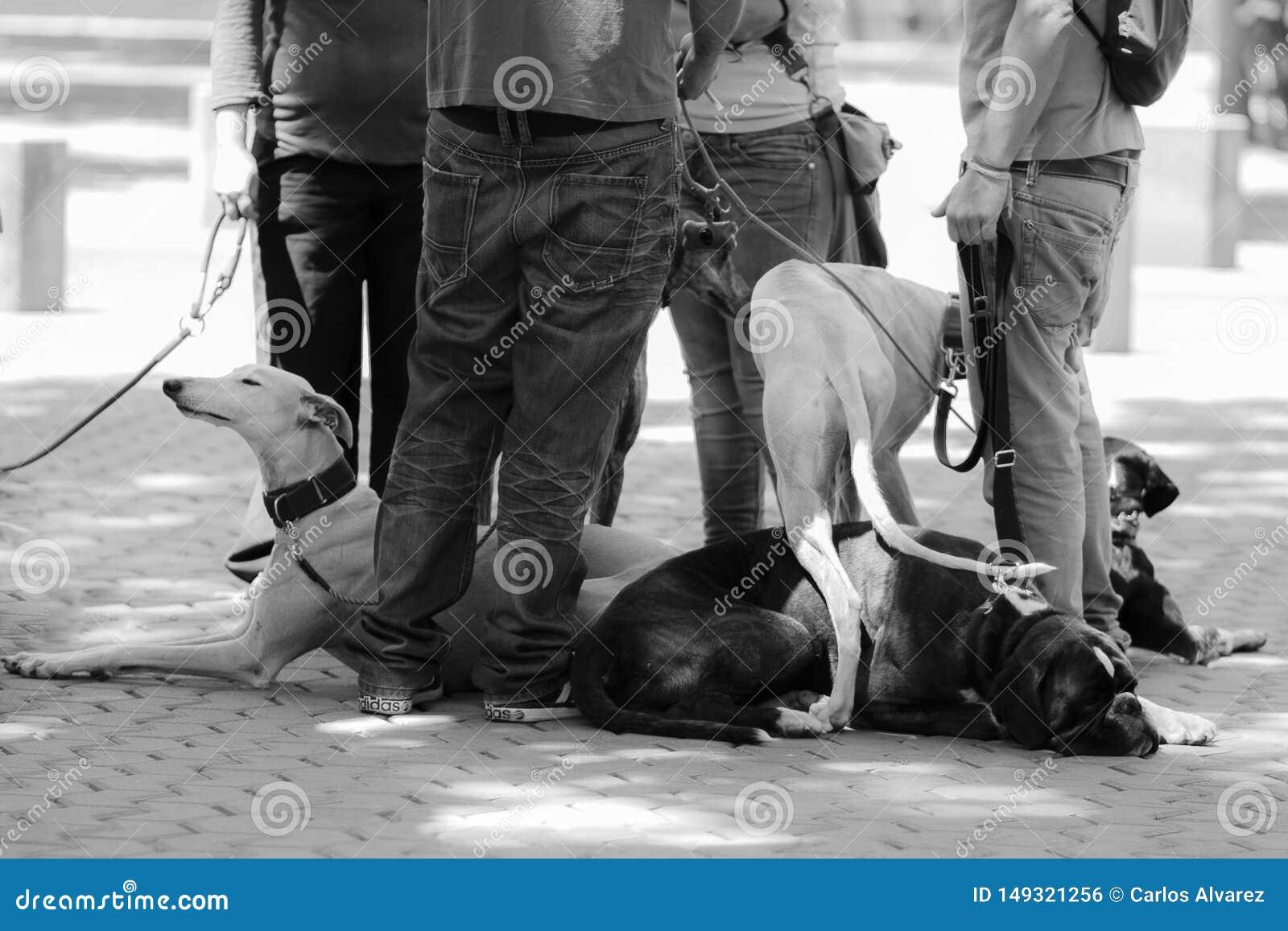 Vergadering van honden met hun meesters