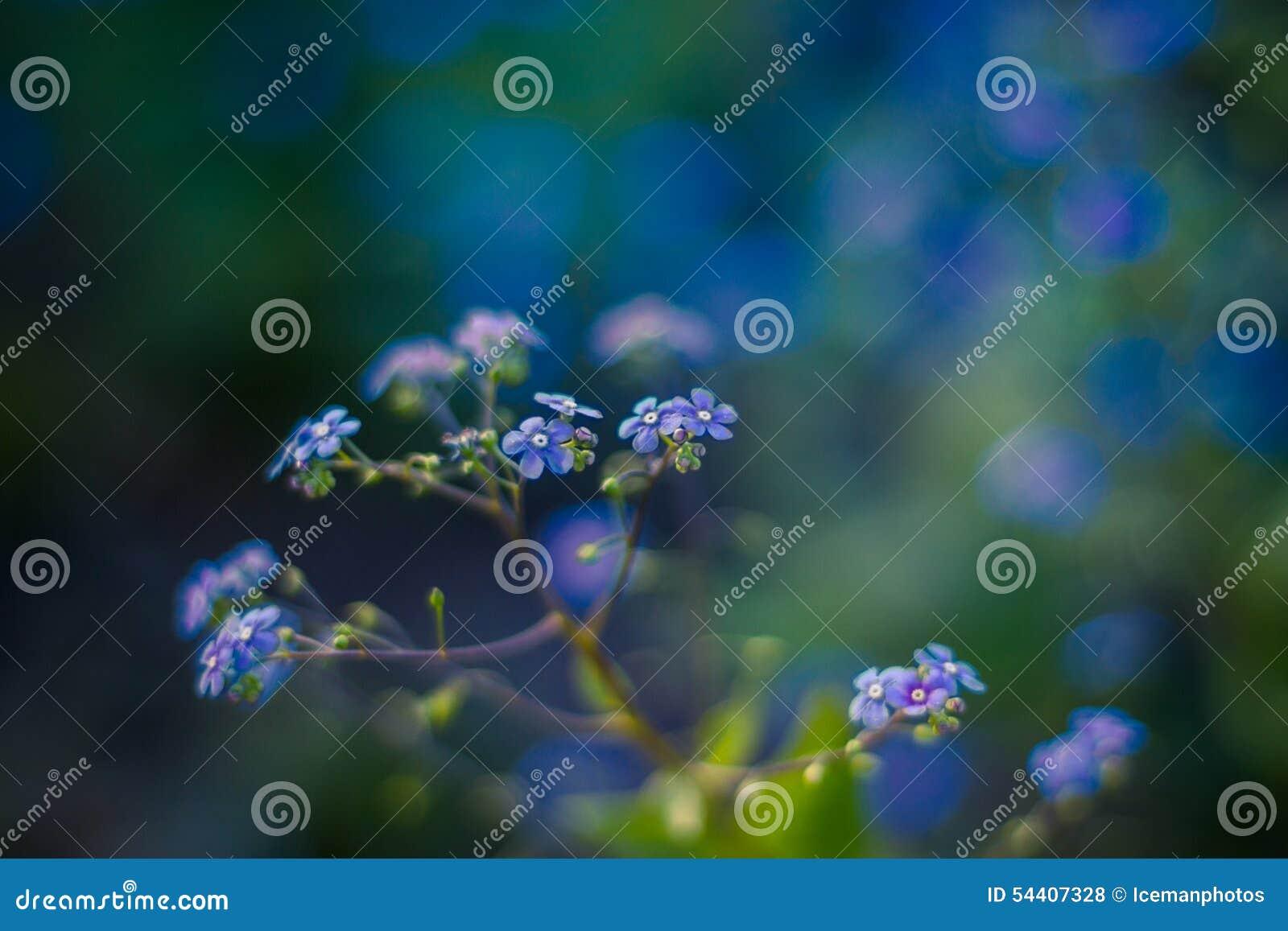 Vergessen Sie mich nicht, kleine Blumen in Form eines Herzens