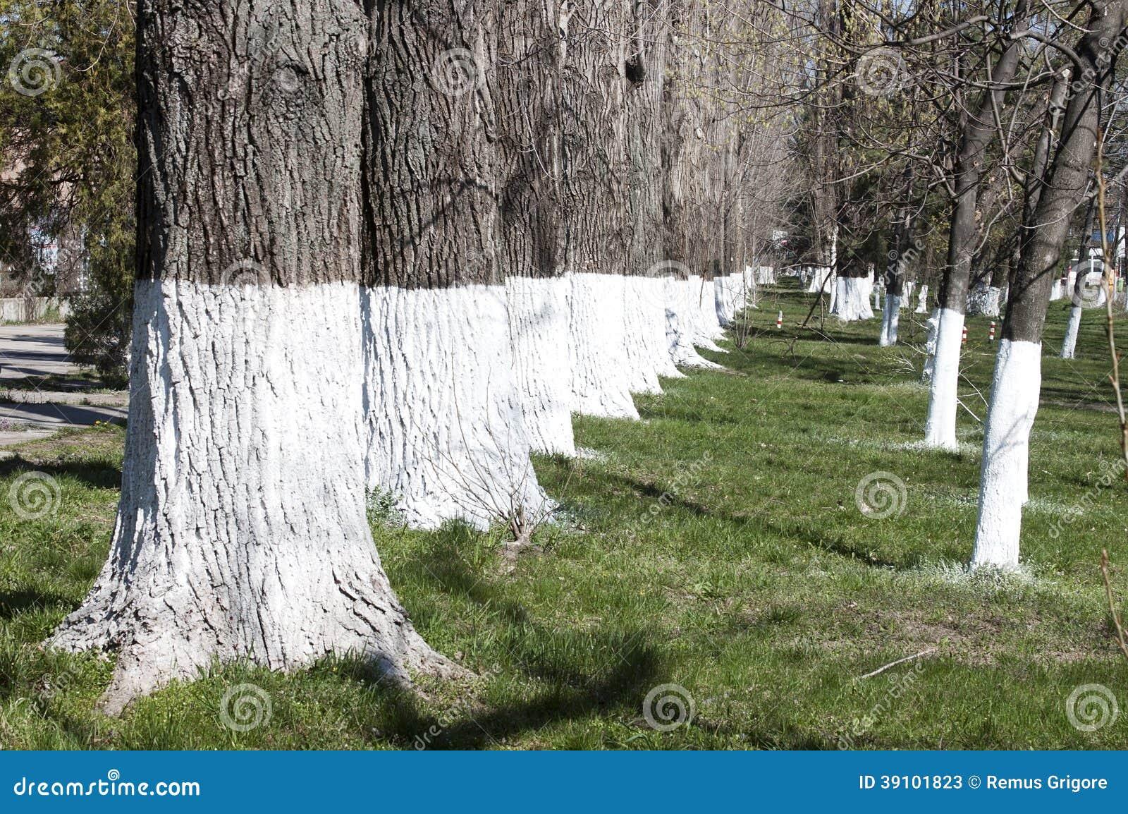 Vergoelijkte bomen
