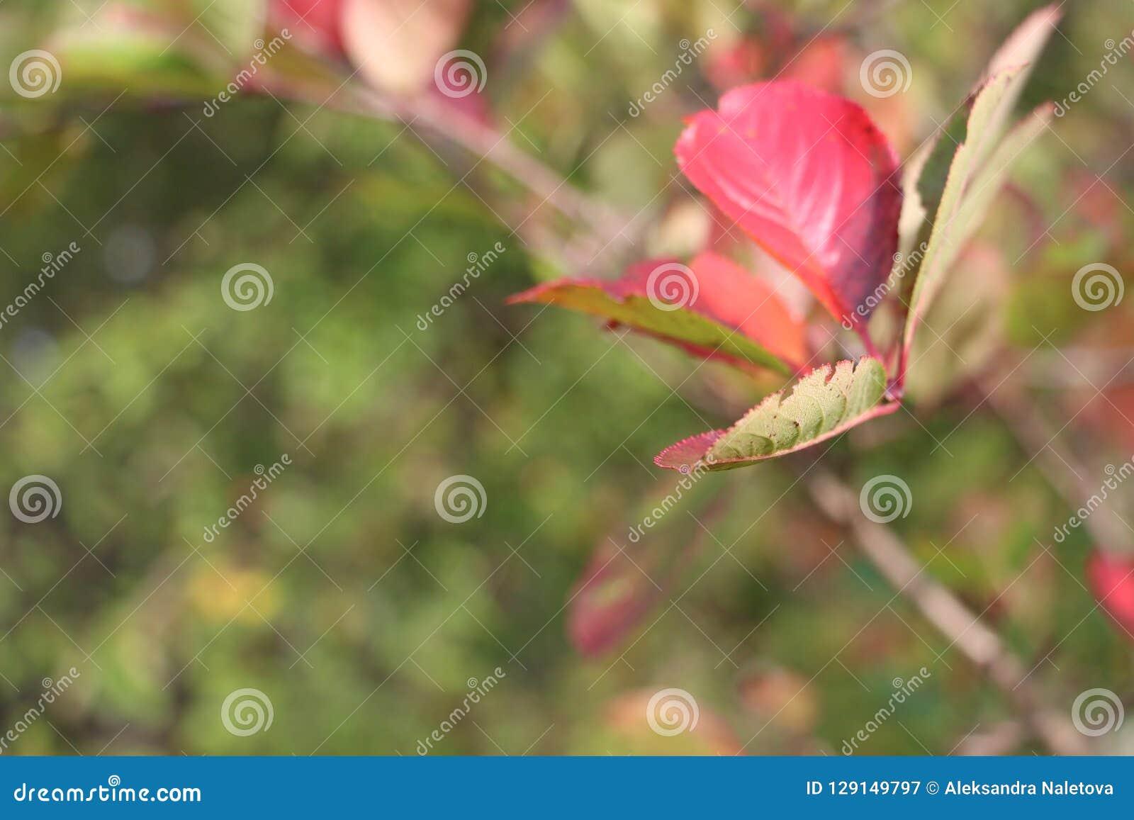 Verjong het blok in grootmoeder` s tuin