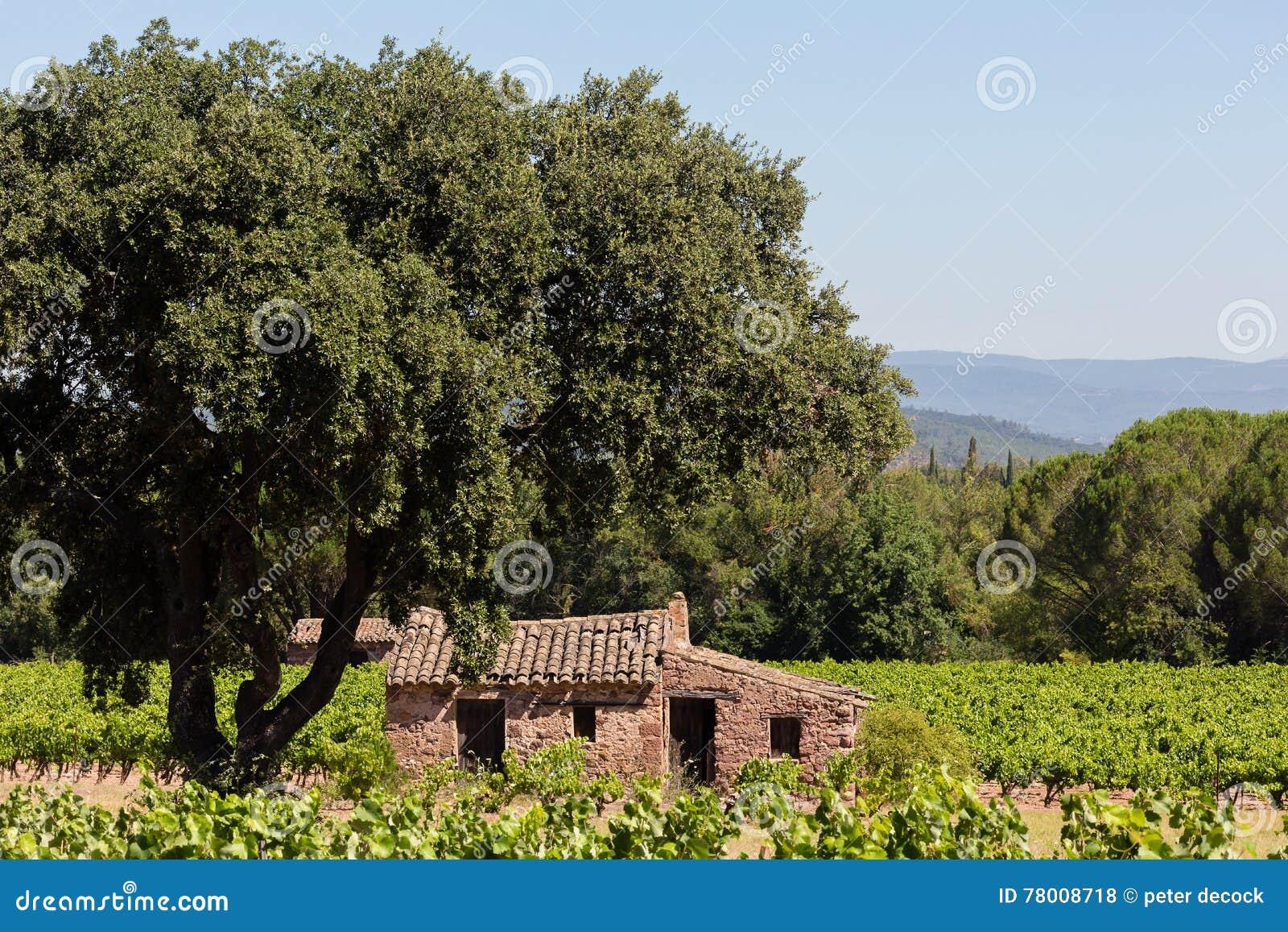 Verlaten huis in wijngaard