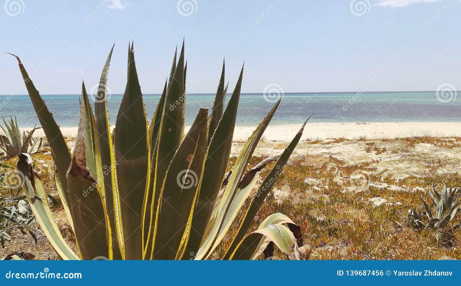 Verlaten struik op het strand met overzeese meningen