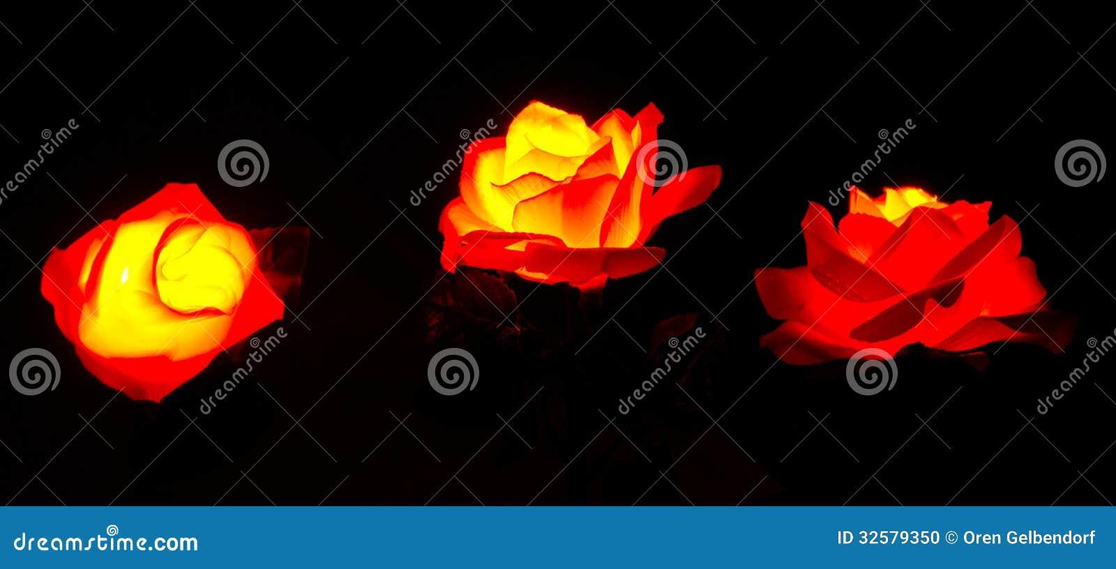 https://thumbs.dreamstime.com/z/verlichte-rode-bloemen-32579350.jpg