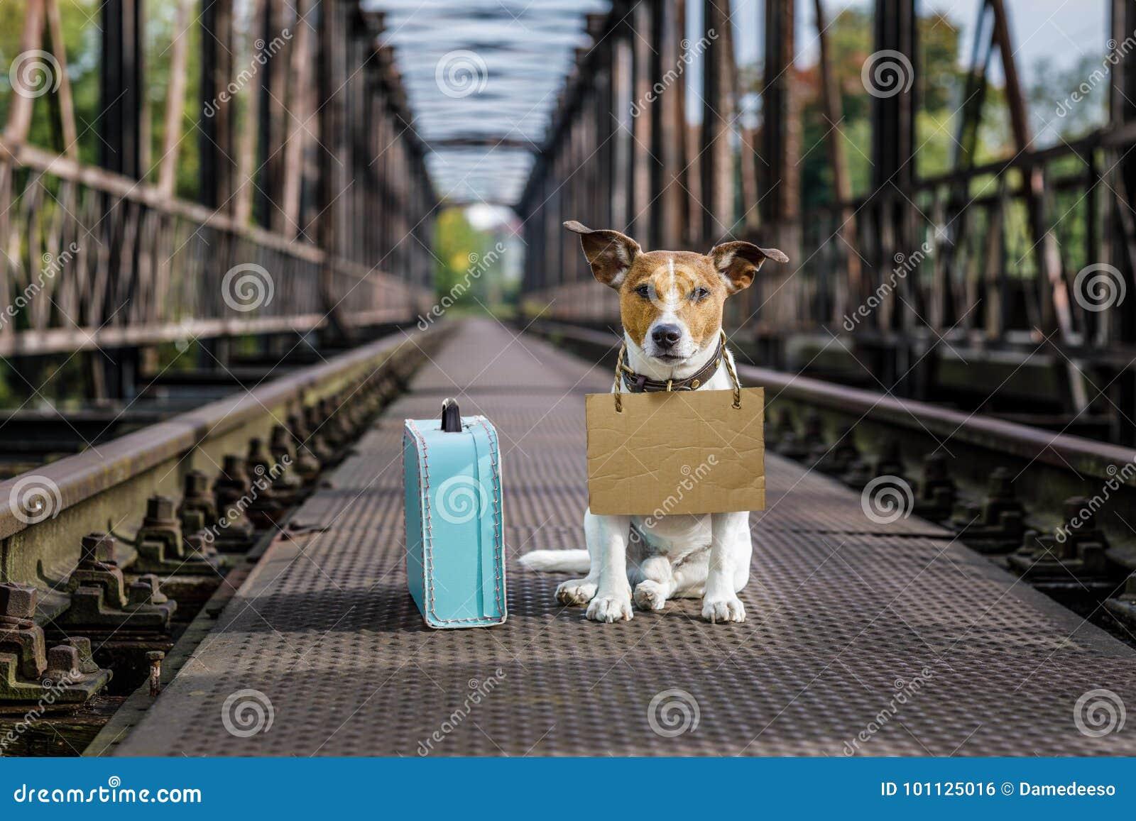 Verloren en daklozen verlaten hond