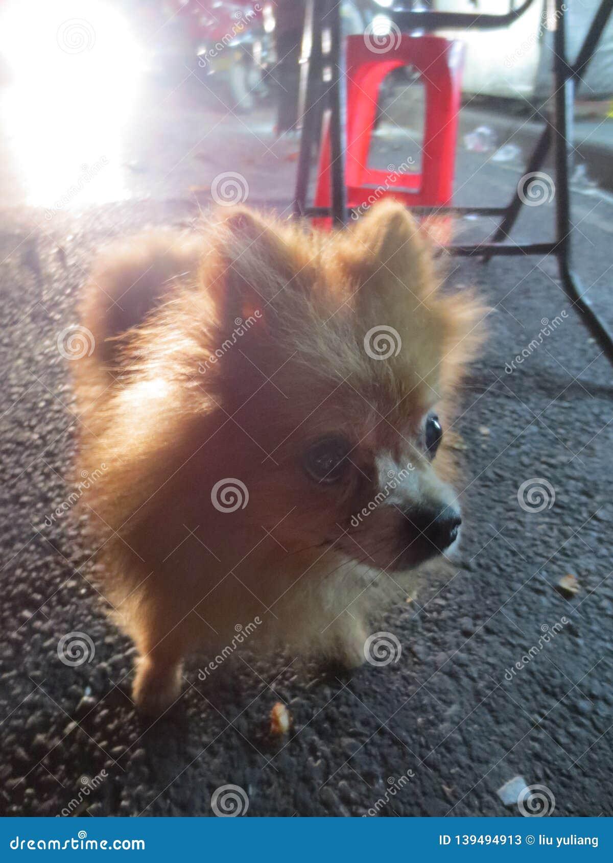 Verloren puppy