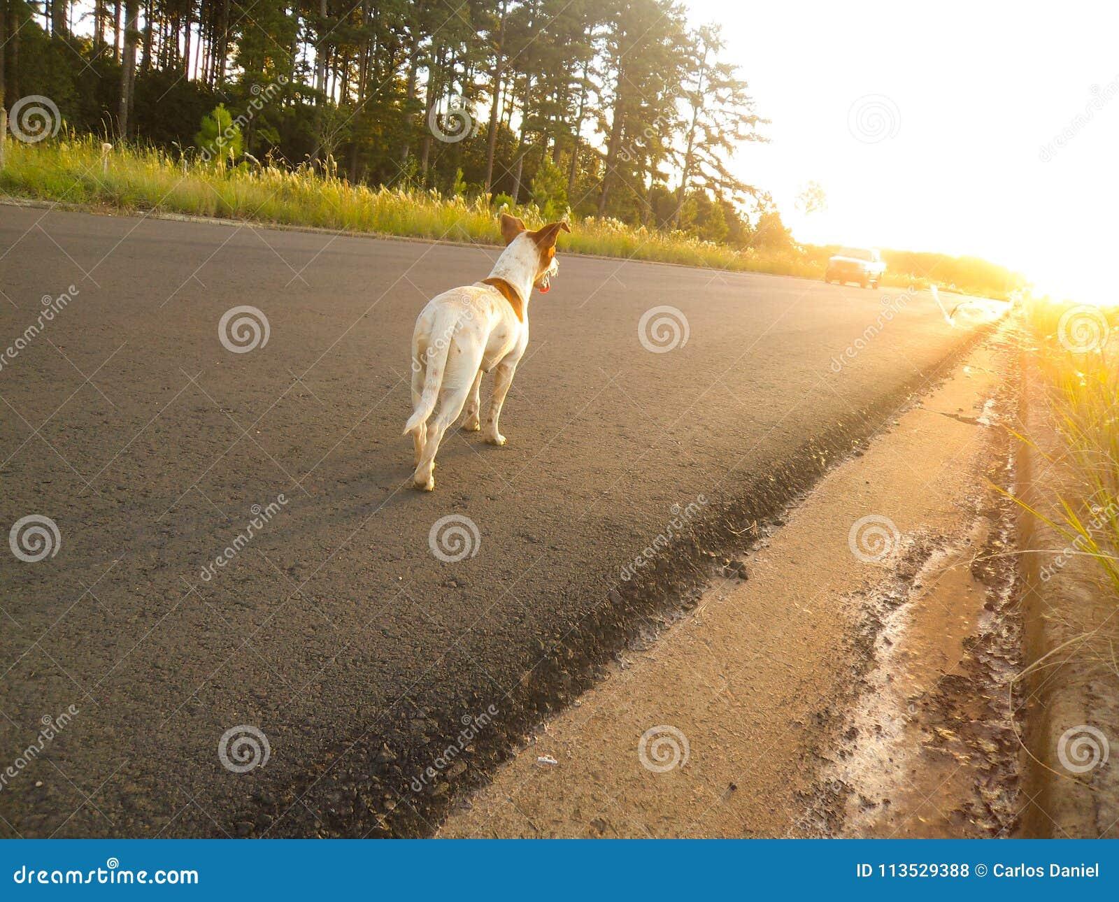 Verlorener Hund, der einen Sonnenuntergang aufpasst Denken, wenn jemand ihn retten wird