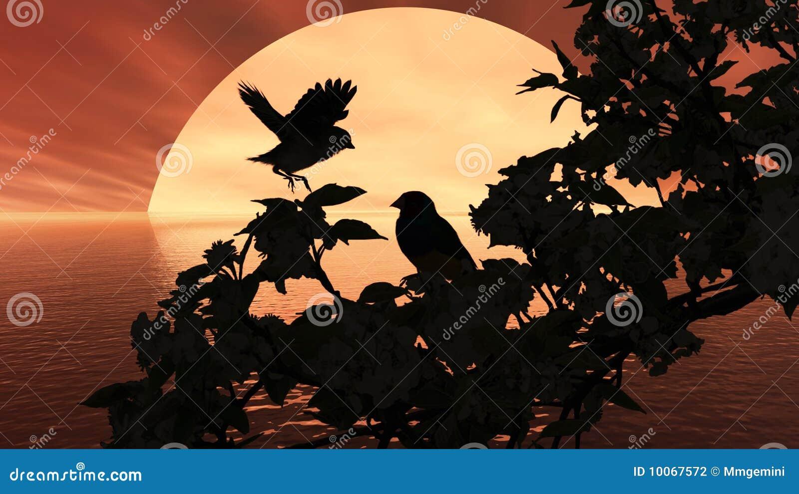 Vermelho da luz do sol do pássaro