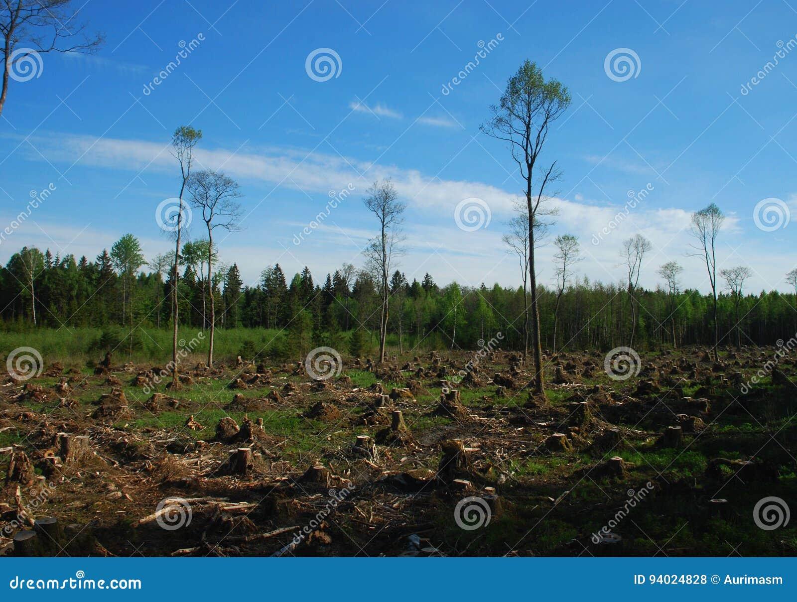 Verminder bos
