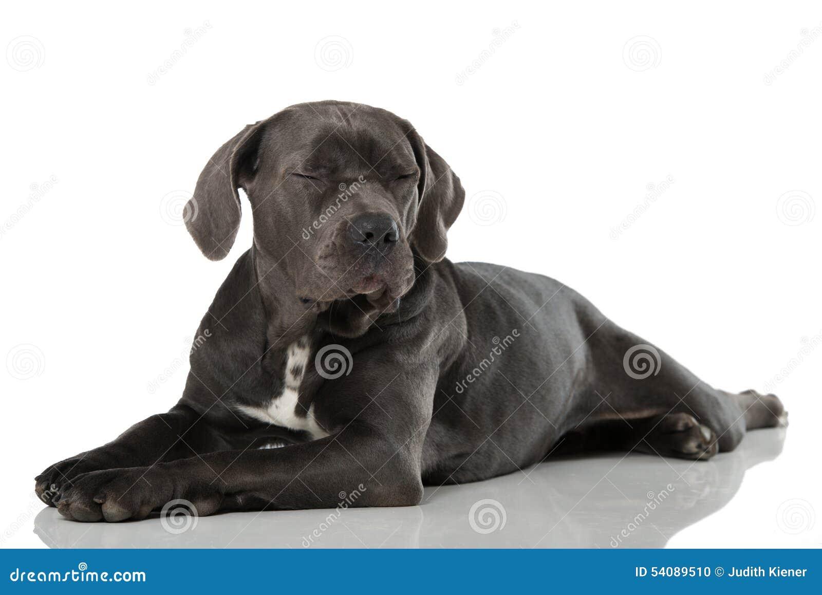 Download Vermoeide Hond stock foto. Afbeelding bestaande uit italiaans - 54089510