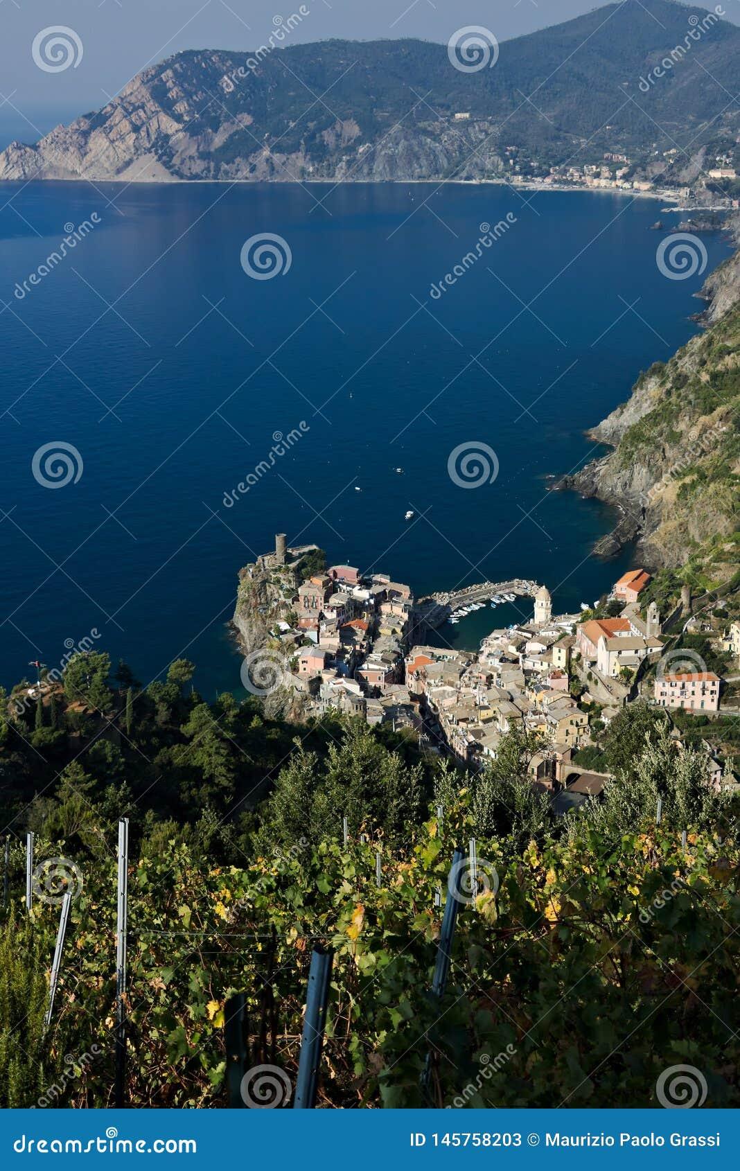 Vernazza, ένα χωριό και ένας αμπελώνας στο Cinque Terre Πανόραμα του χωριού Vernazza και των αμπελώνων του Shiacchetr