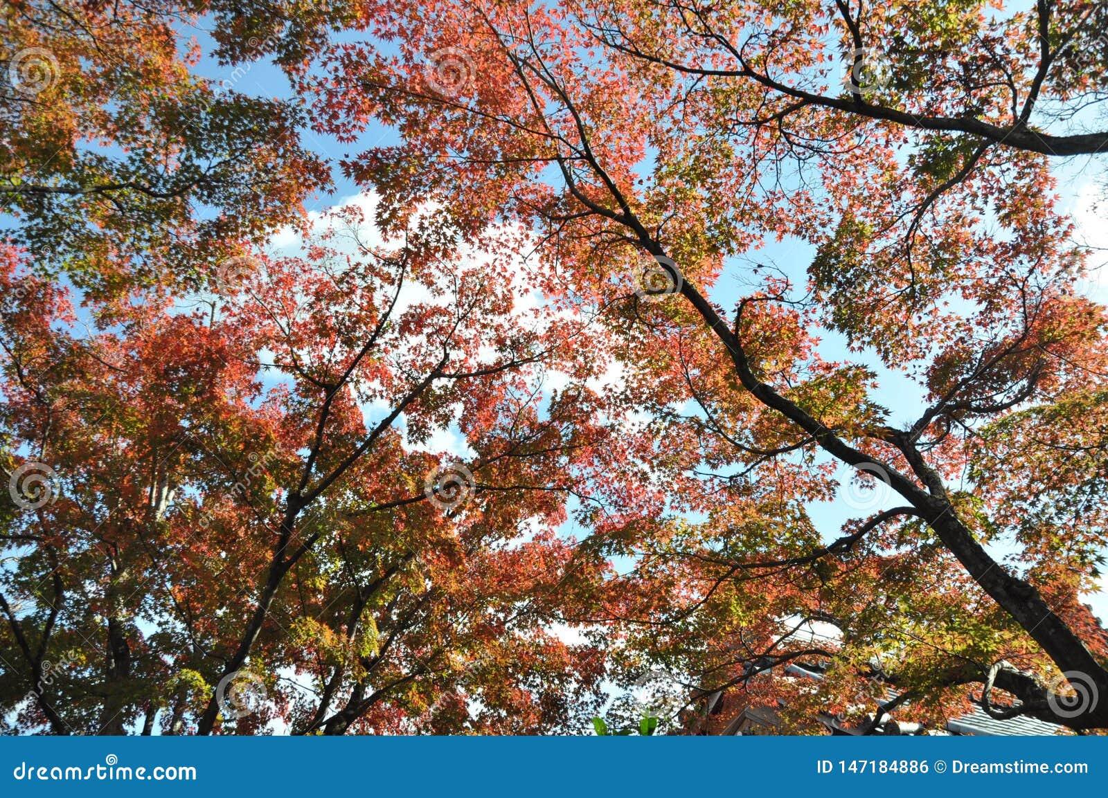 Vero Autumn Leaves Tree rosso