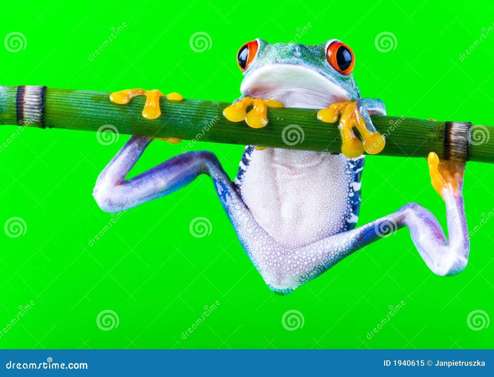 Verrückter Frosch stockbild. Bild von frösche, farben - 1940615