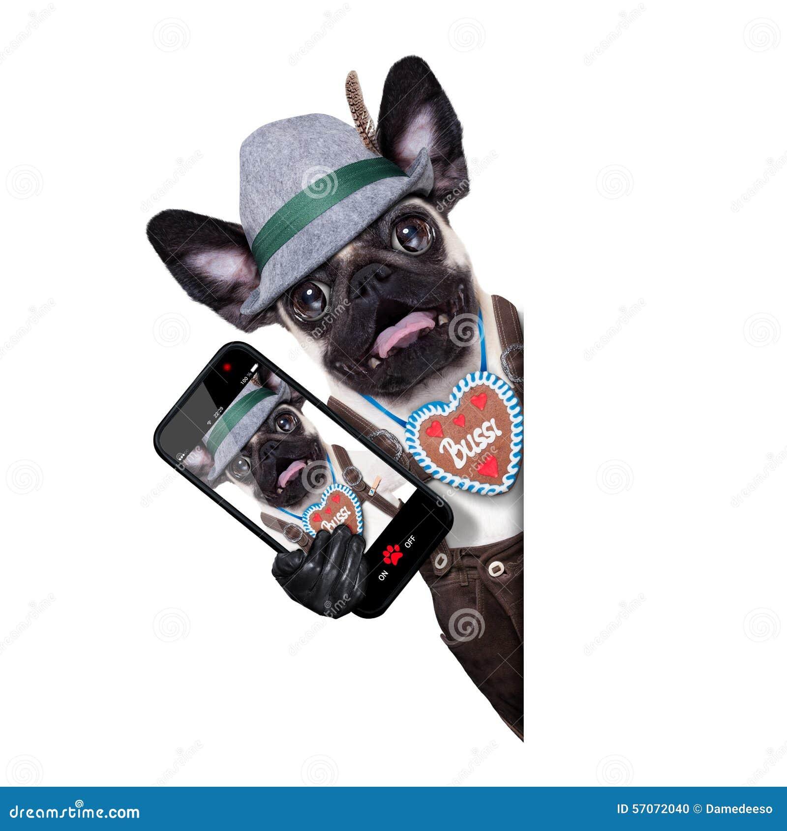 Verraste gekke Beierse hond