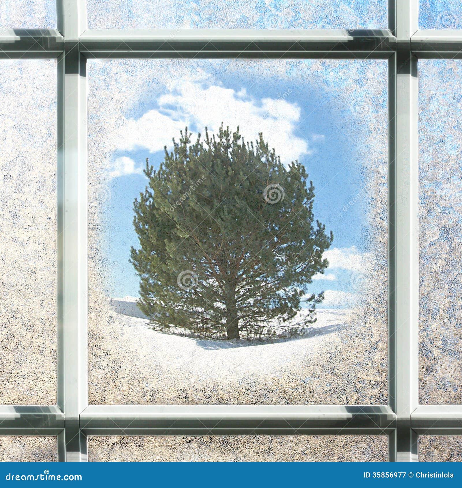 Verre de fen tre carr givr d 39 hiver avec le pin dehors photographie stoc - Fenetre carreaux de verre ...