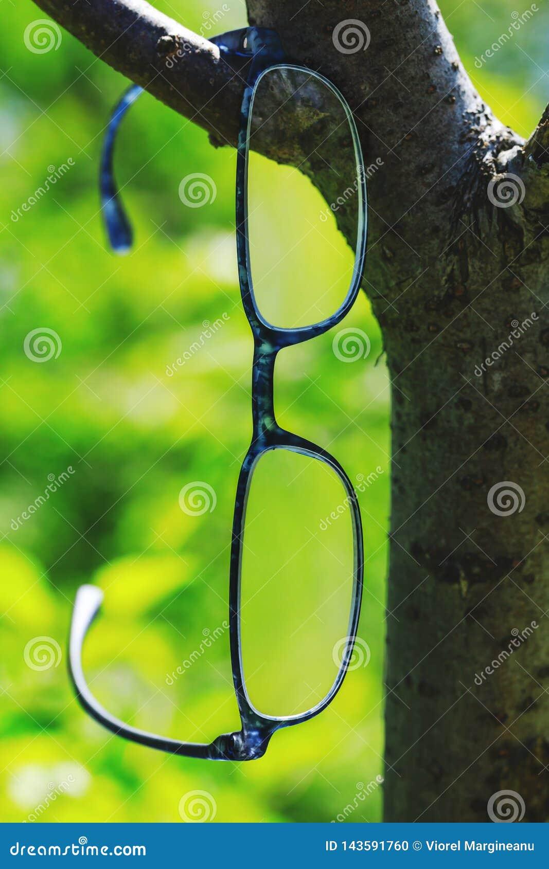 Verres modernes de style accrochant sur une branche d arbre Beaux verres d optométrie sur le fond naturel vert Photo conceptuelle