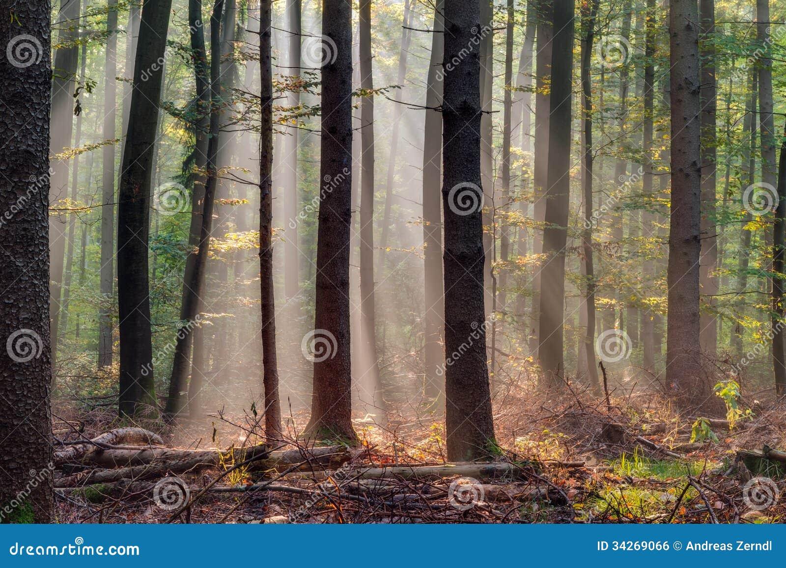 Verrukt Autumn Forest