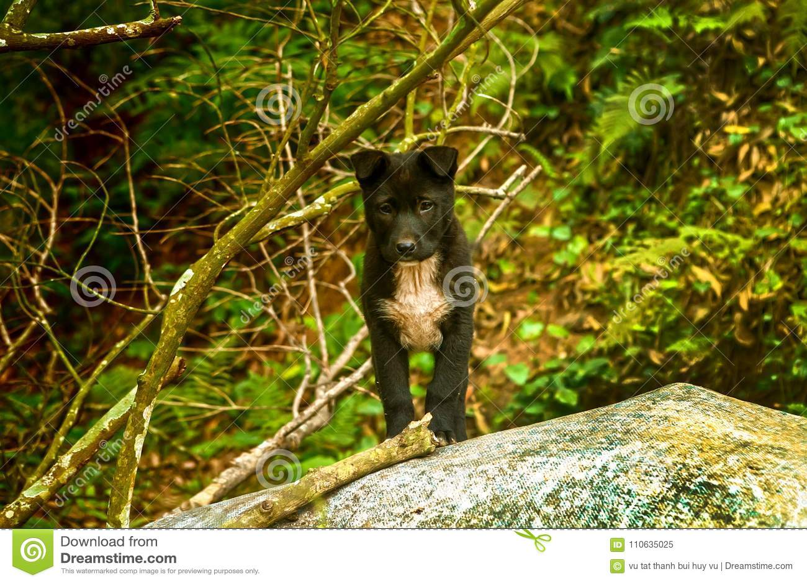 Verry leuk van de puppyhond bevindt zich in het boszoogdier Hond Huisdier Portret reuk Canis Lupus binnenlandse hond