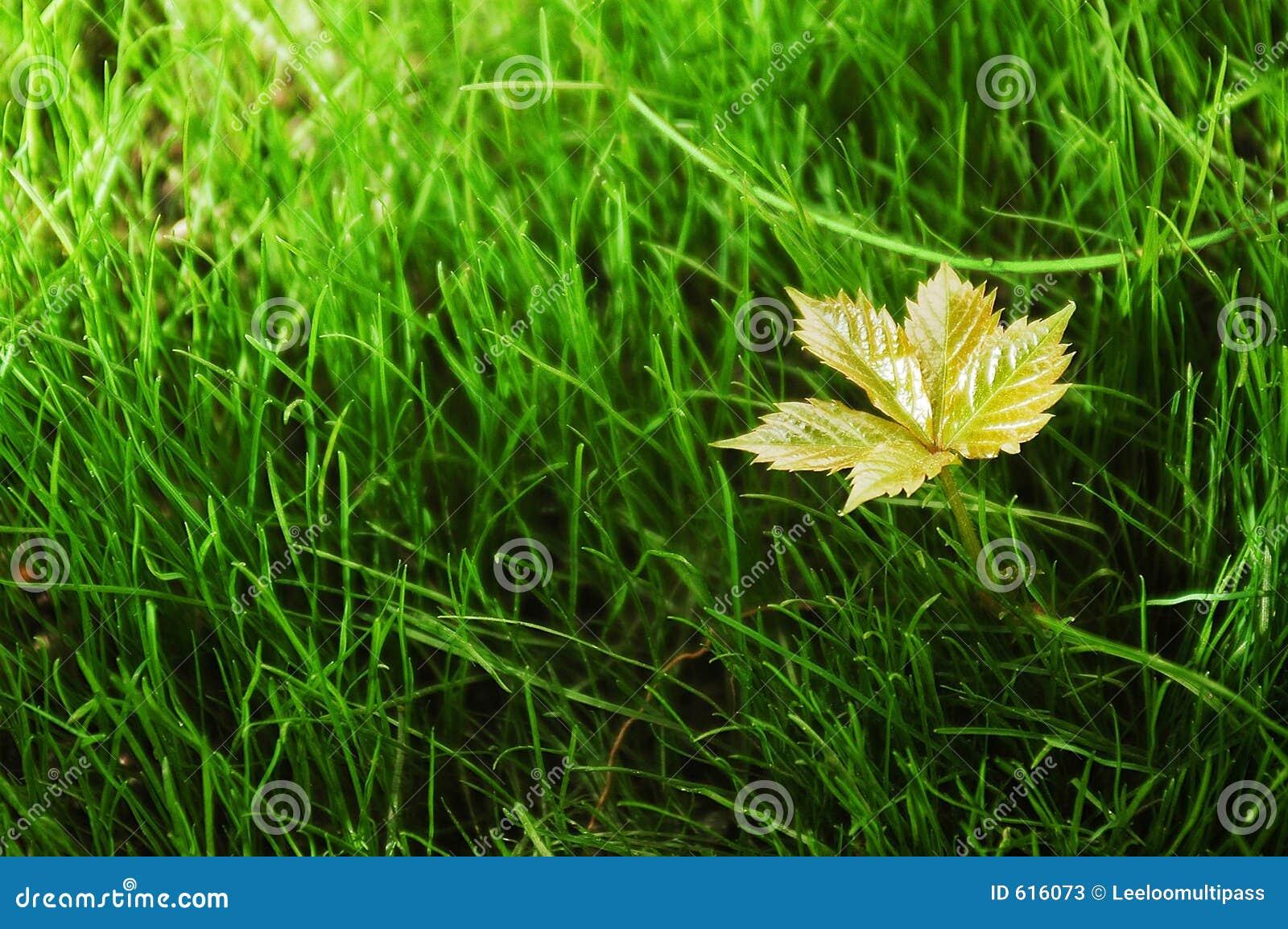 Vers Gras