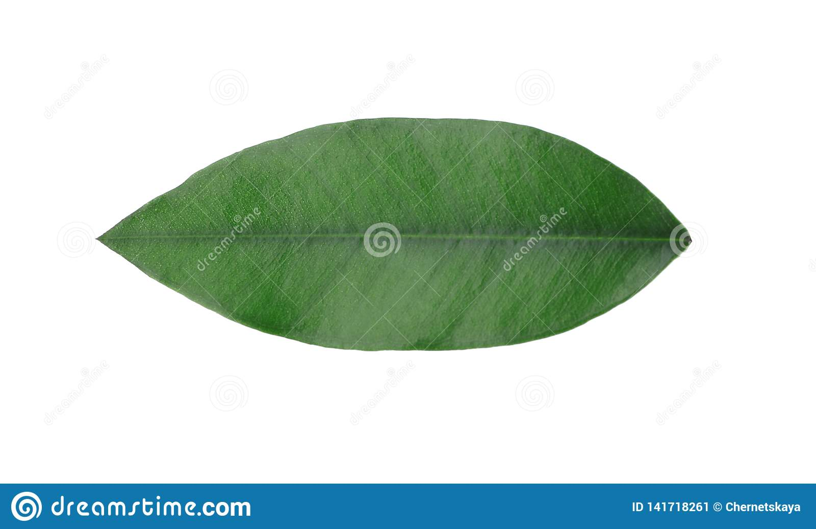 Vers groen oranje blad