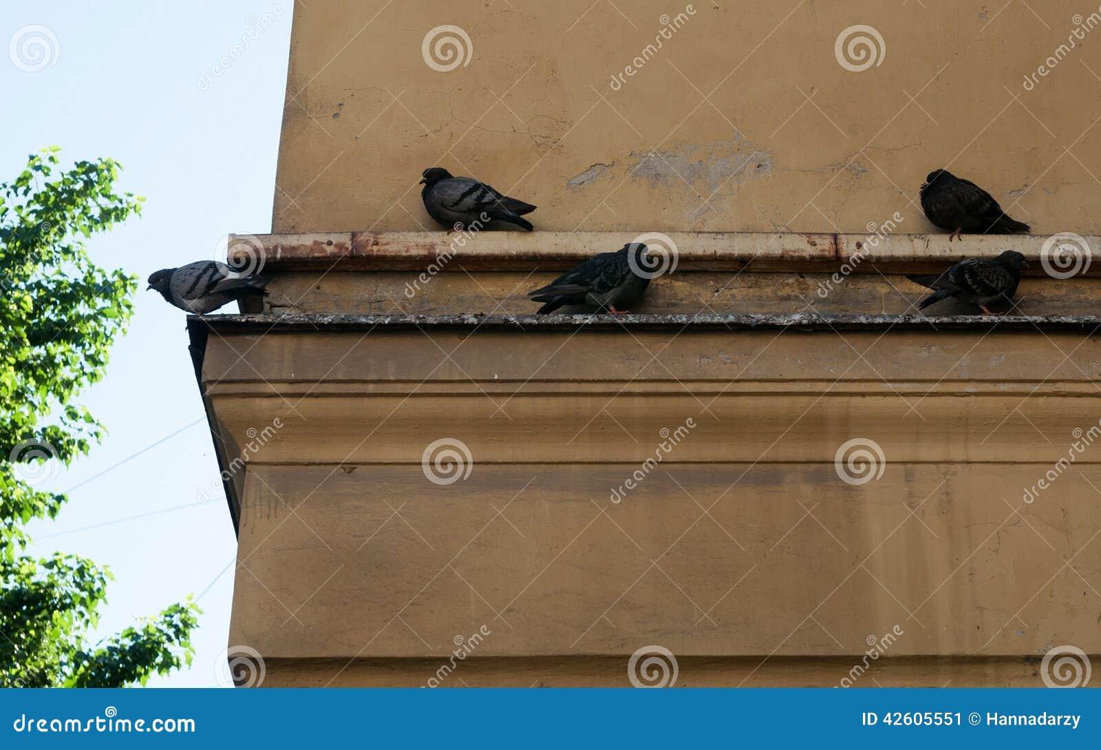 Verscheidene duiven die op richel een huis zitten