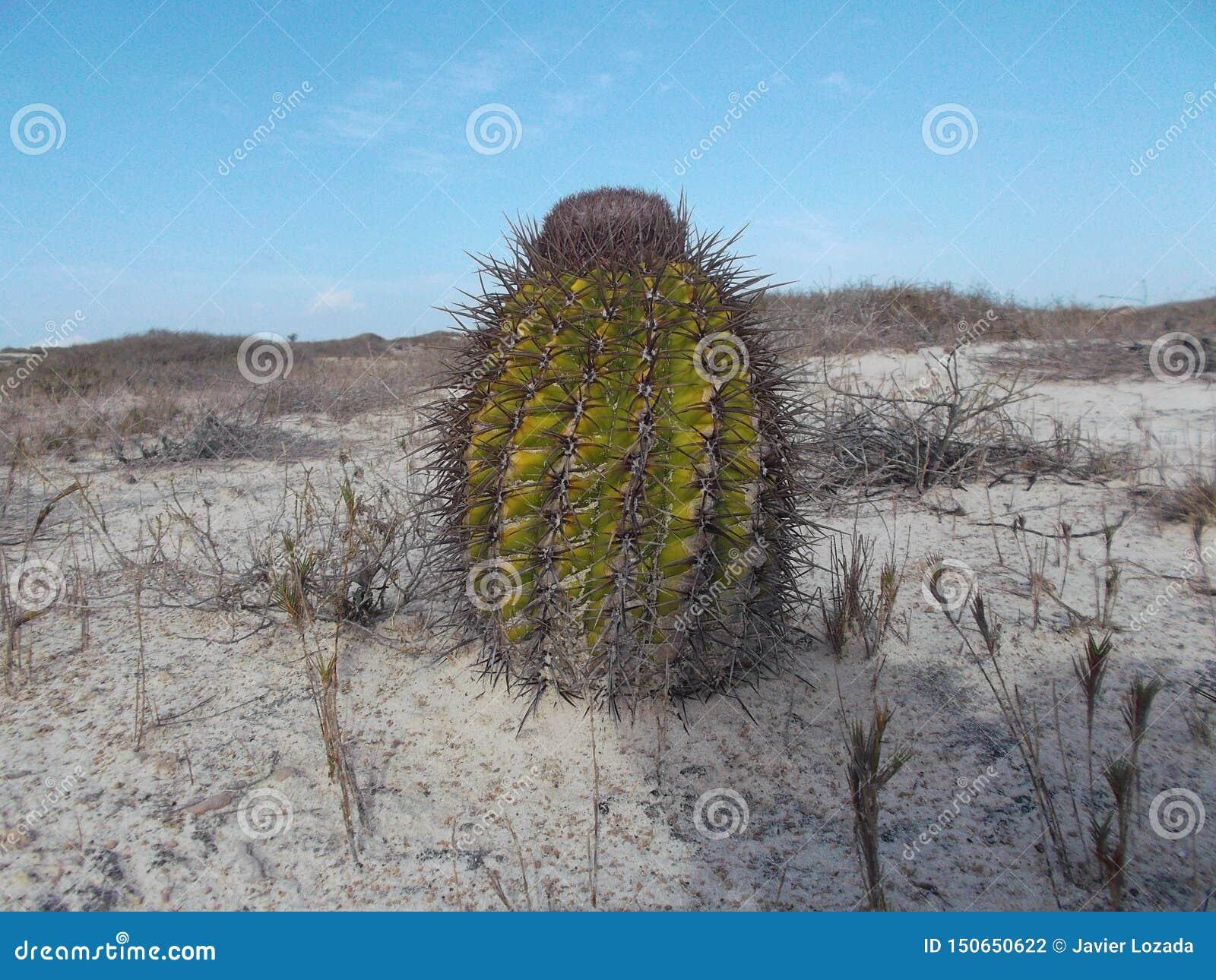 Verschiedene Arten, Spezies und Klassen des Kaktus und seiner Bearbeitung