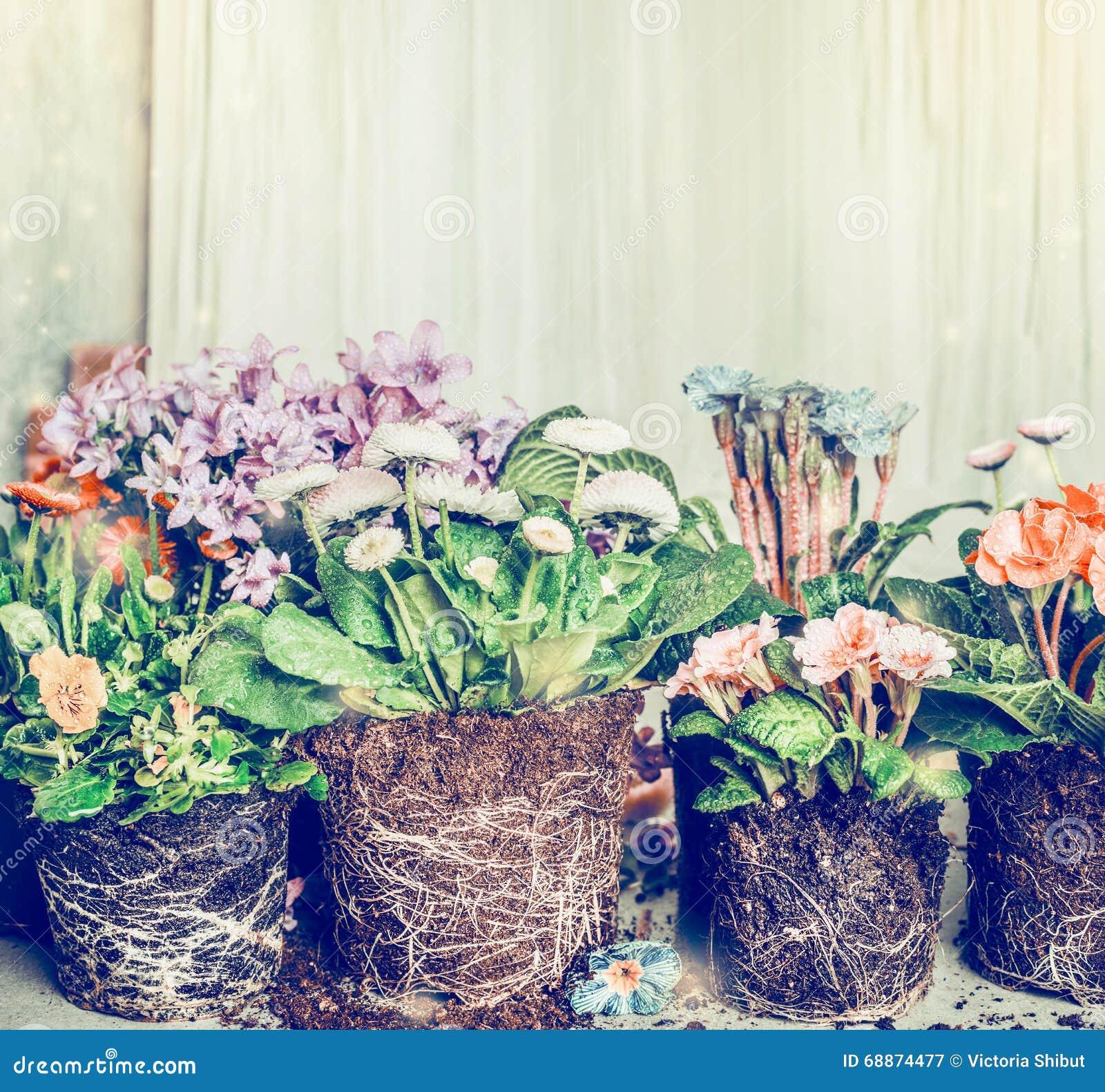 verschiedene blumen f r das pflanzen im garten oder in den t pfen stockbild bild von masse. Black Bedroom Furniture Sets. Home Design Ideas